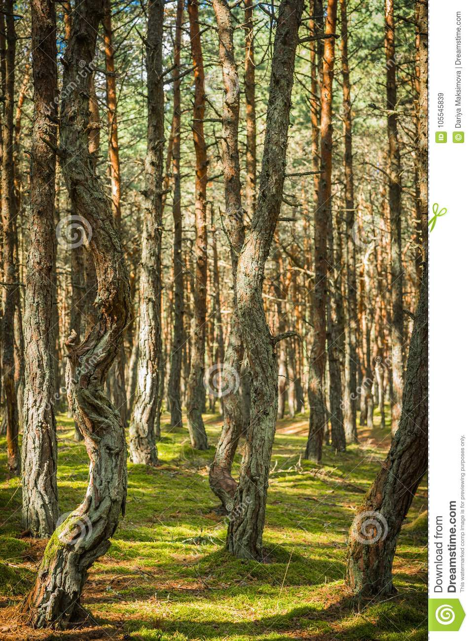 Dancing forest