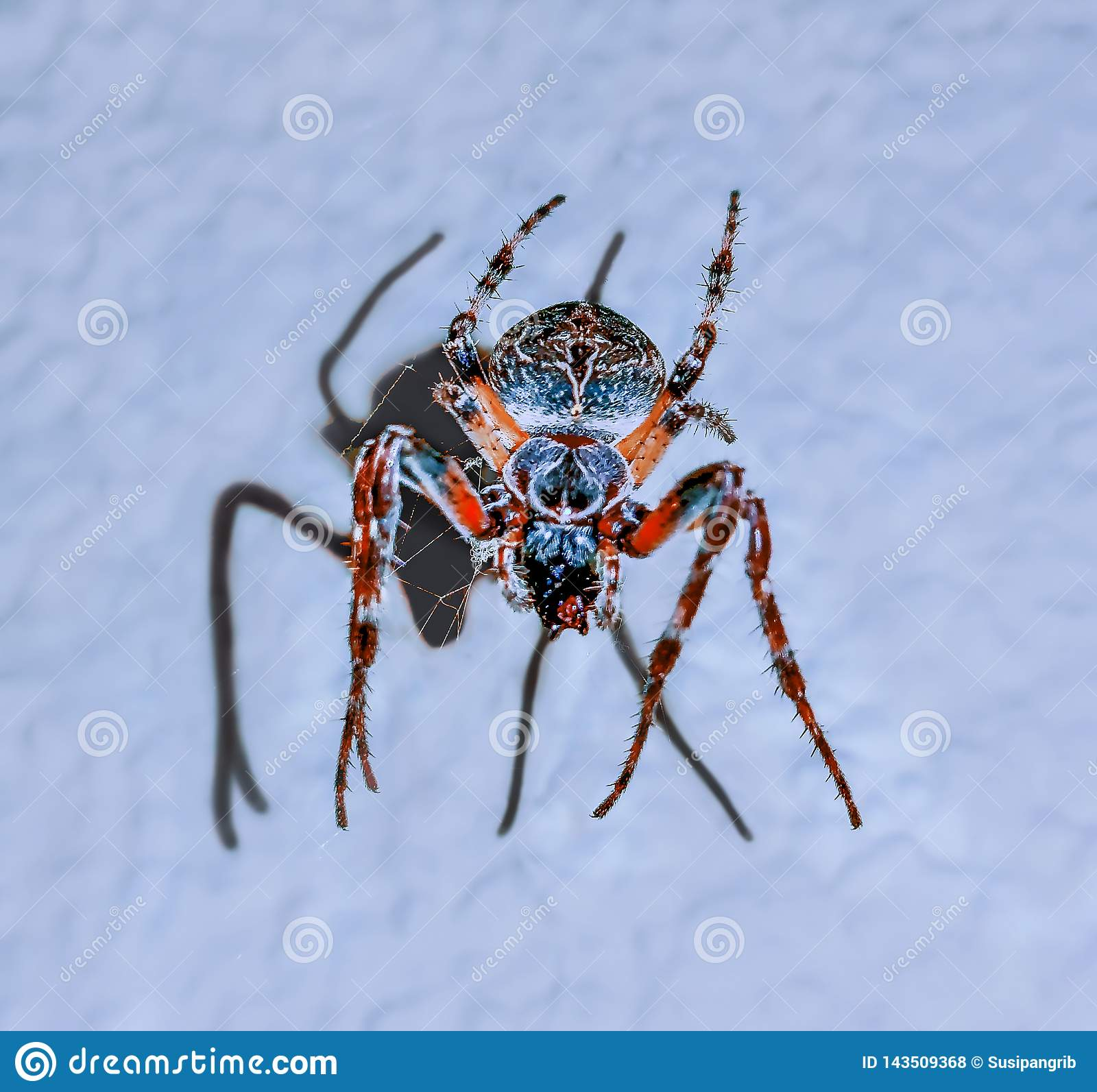Dancing girl on the colourful  spider