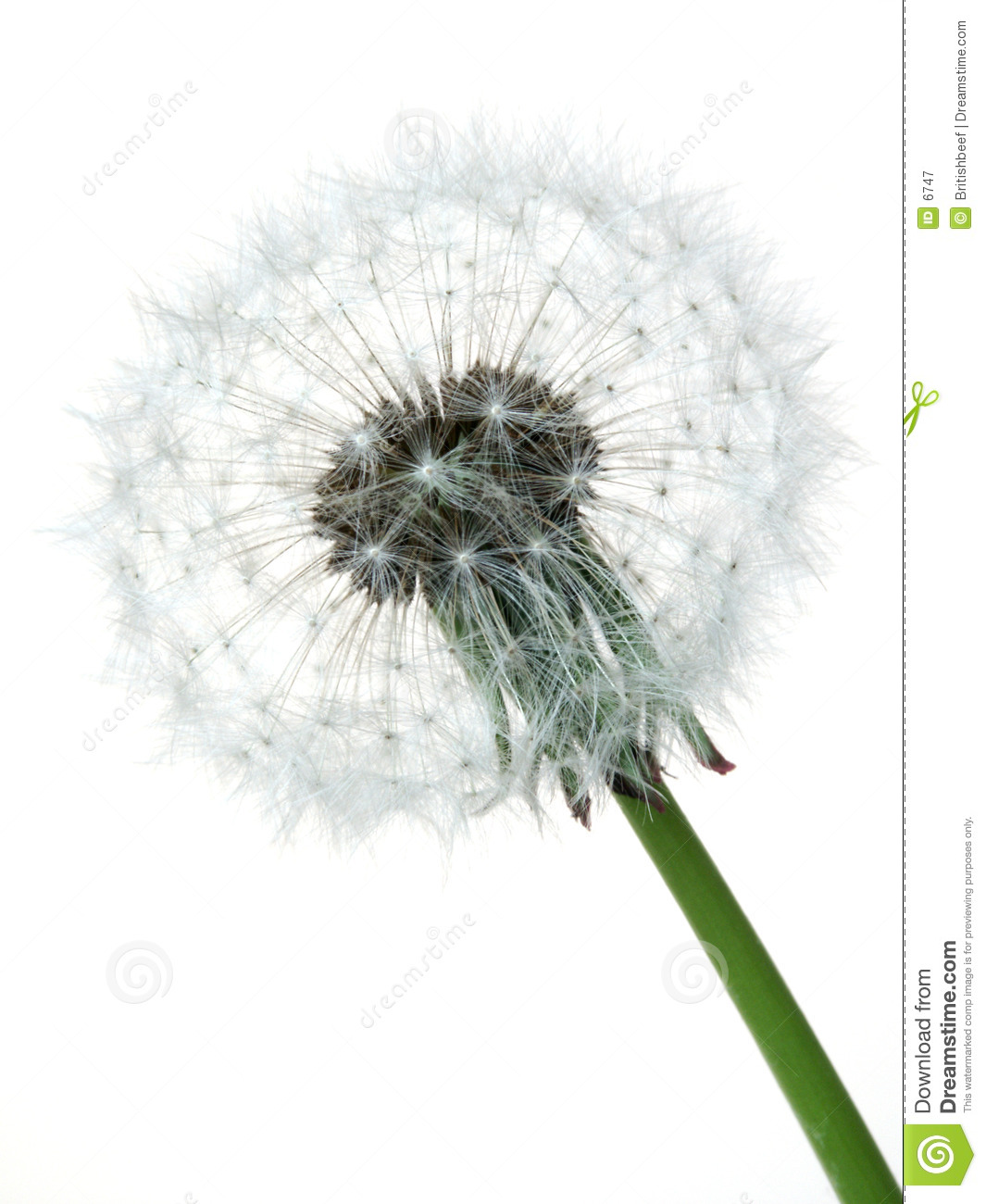 Dandelion Royalty Free Stock Photography - Image: 6747