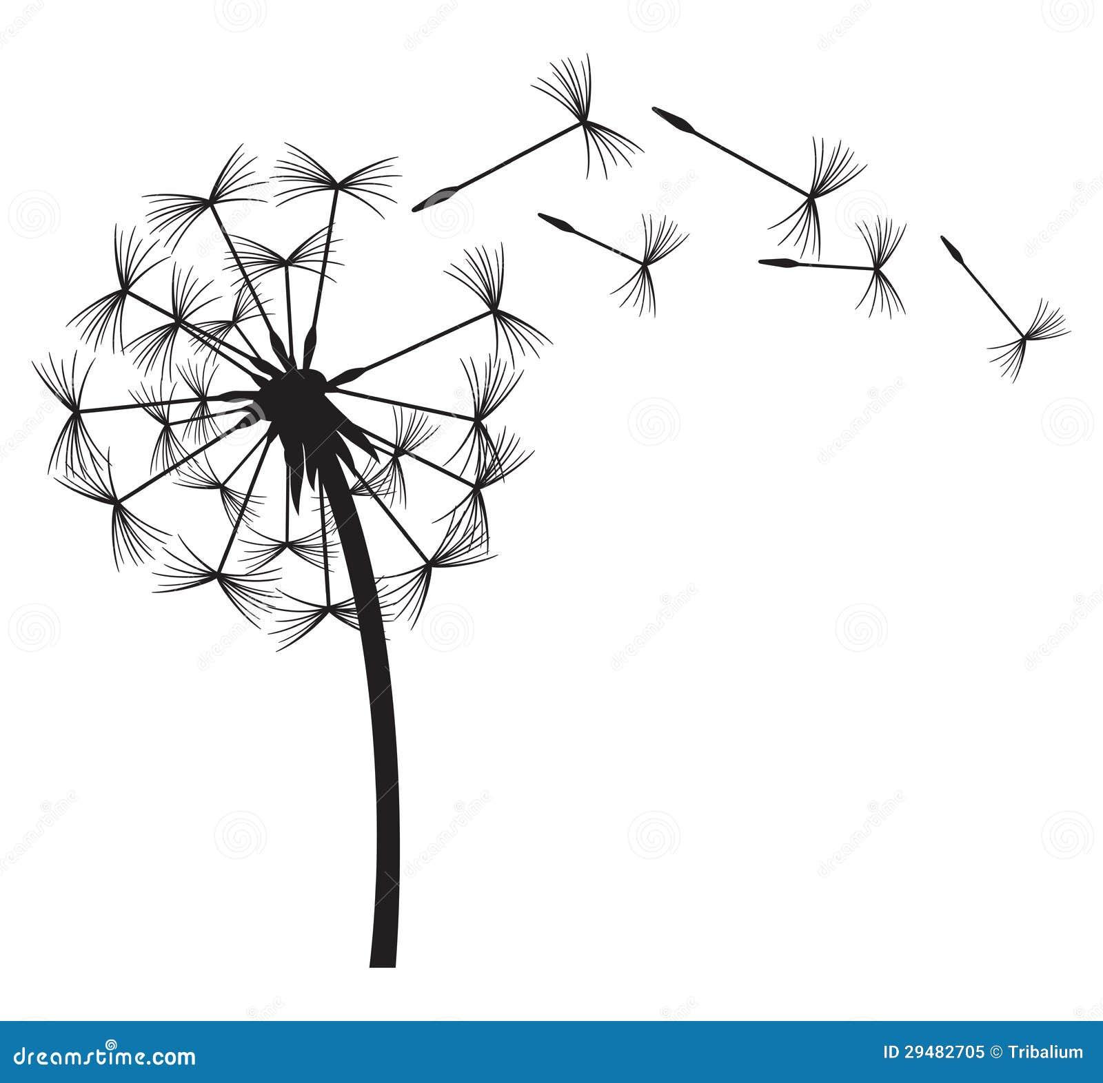 Dandelion Royalty Free Stock Photo Image 29482705