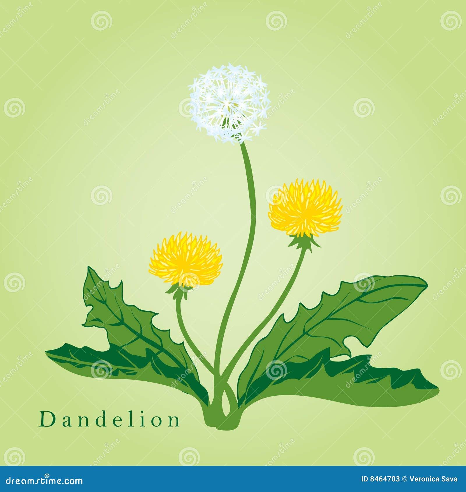 Yellow Dandelion Clip Art – Clipart Download