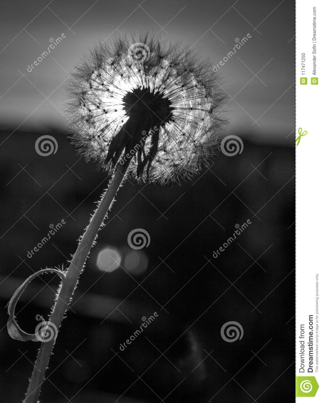 Dandelion On A Blurred Background With Sky And Backlight