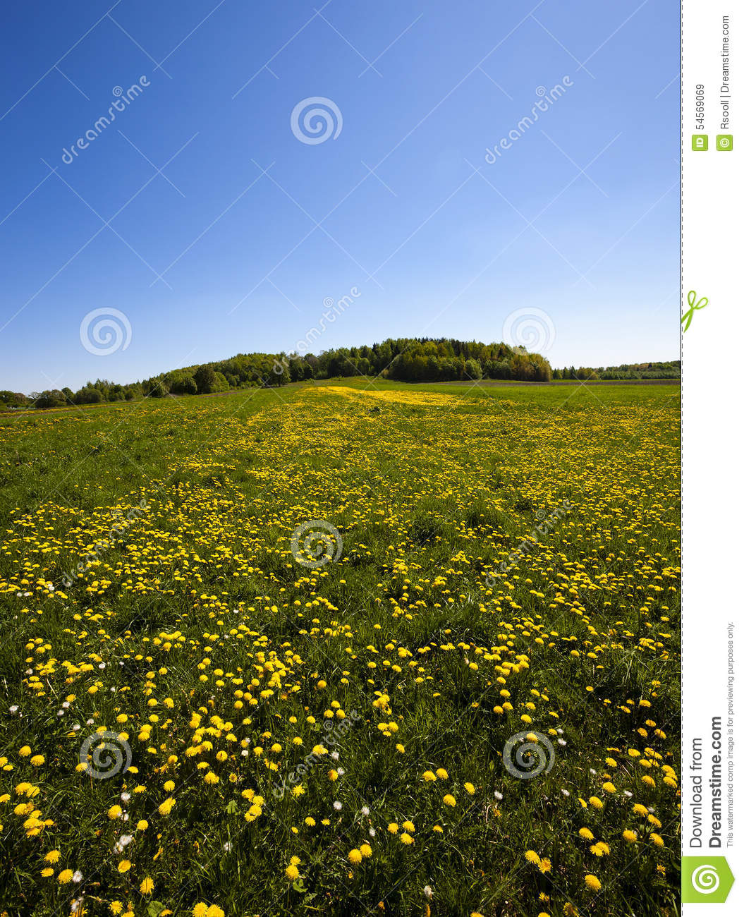 Dandelion Field Stock Image. Image Of June, Grass, Blossom