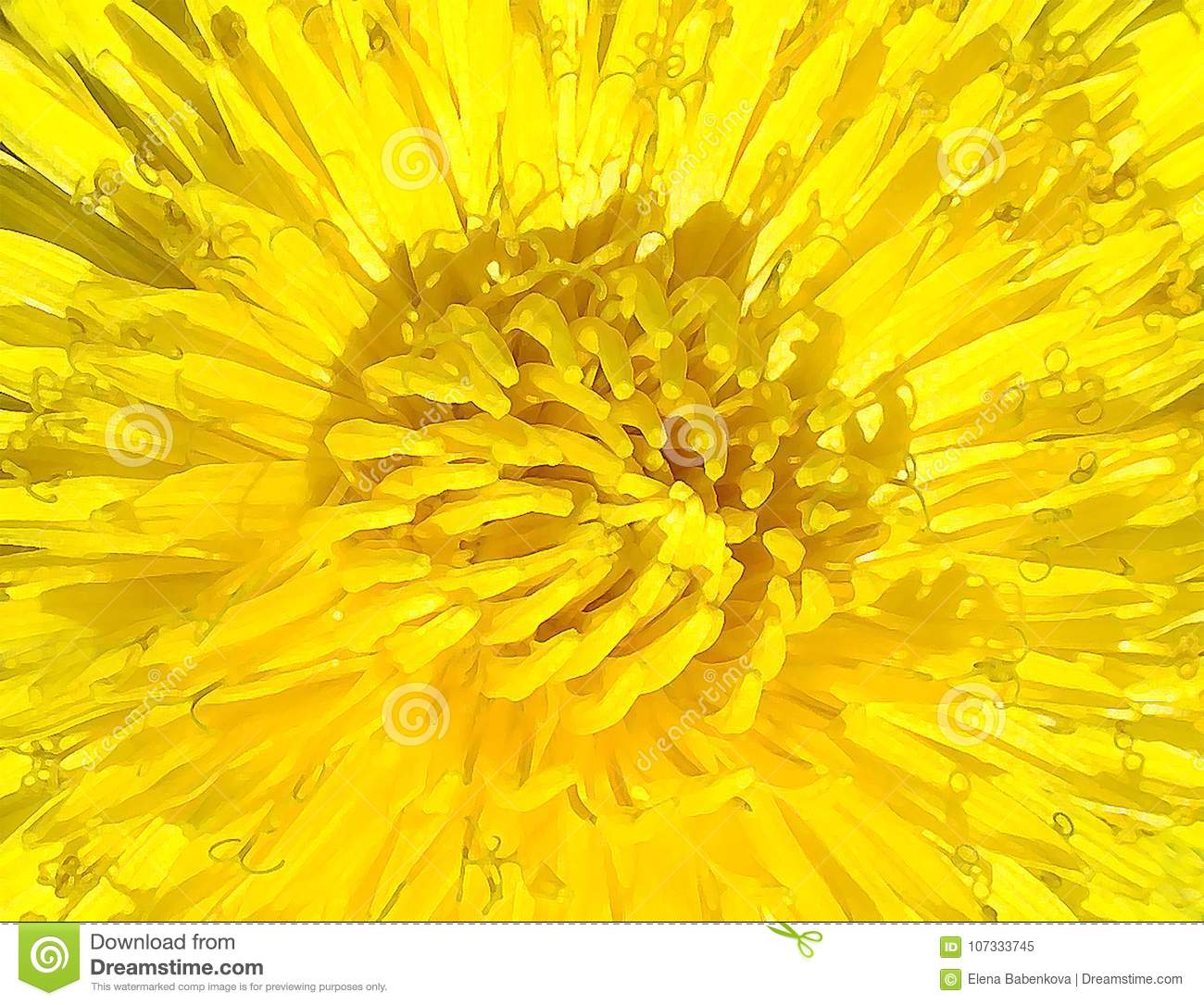 Beautiful Background Image Yellow Flower Of The Dandelion And Its