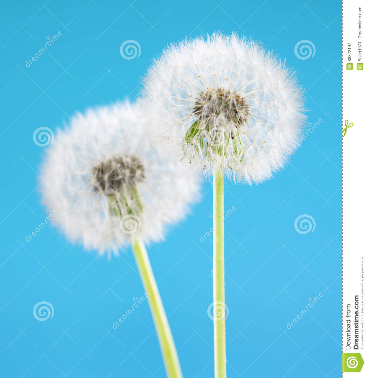 Dandelion Flower On Sky Background. Object Isolated On