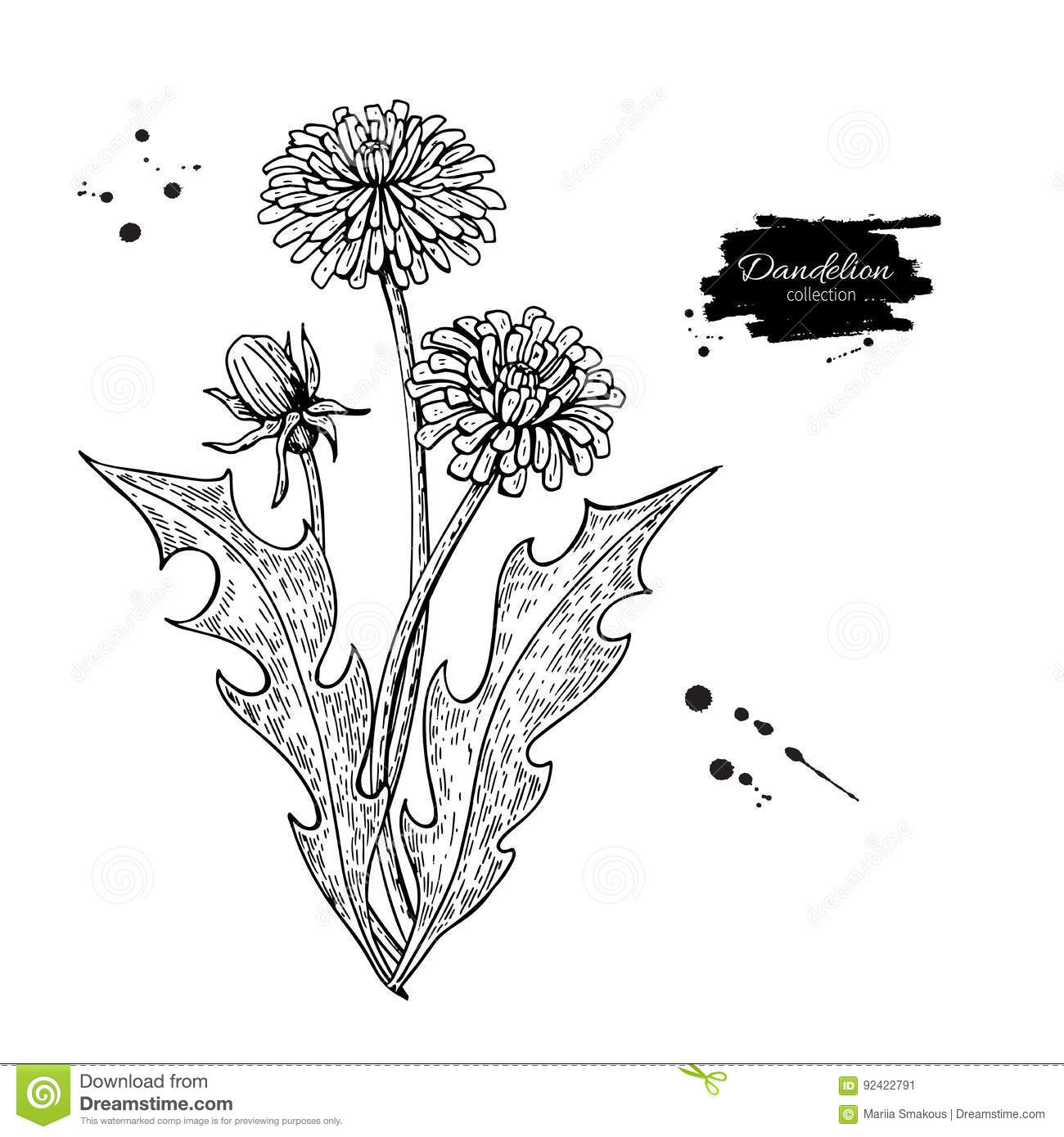 Plant top view vector in group download free vector art stock - Dandelion Flower Vector Drawing Set Isolated Wild Plant And Leaves Herbal Engraved Stock Vector