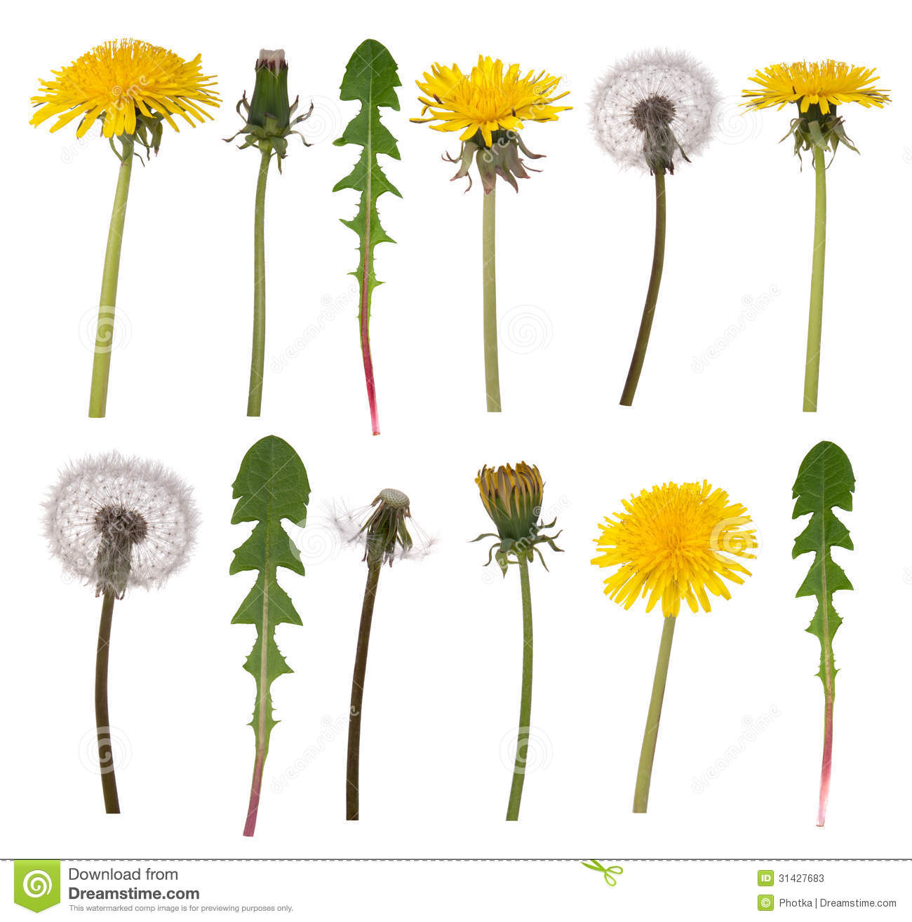 9 also Stock Photos Dandelion Flowers Leaves Isolated White Background Image31427683 likewise Voiture Voiture De Sport De Luxe 1300629 further Hcm Reunif moreover Camille Seaman. on beautiful architecture