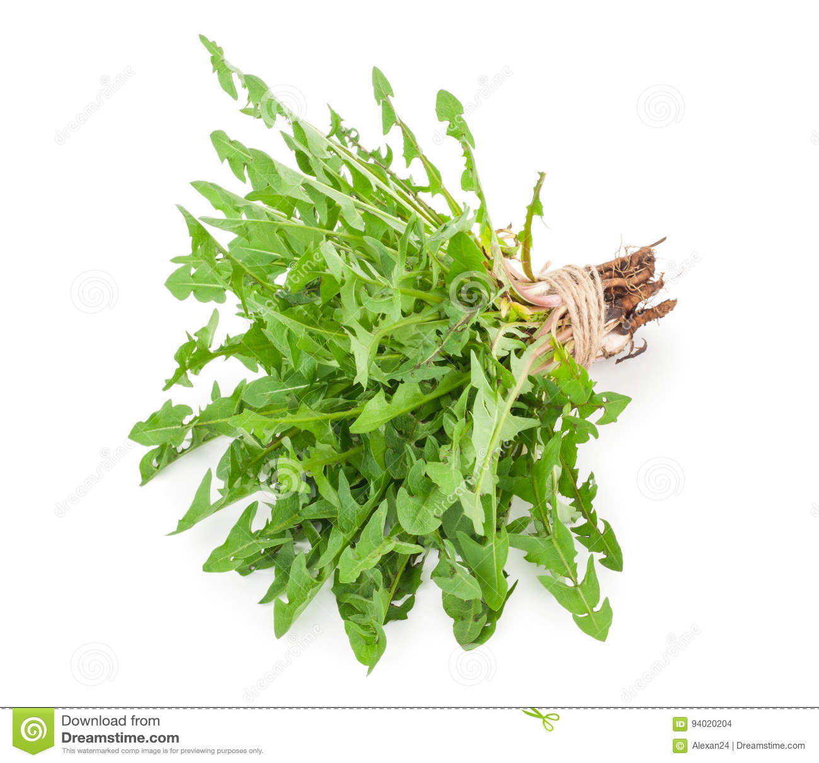 Dandelion herbs