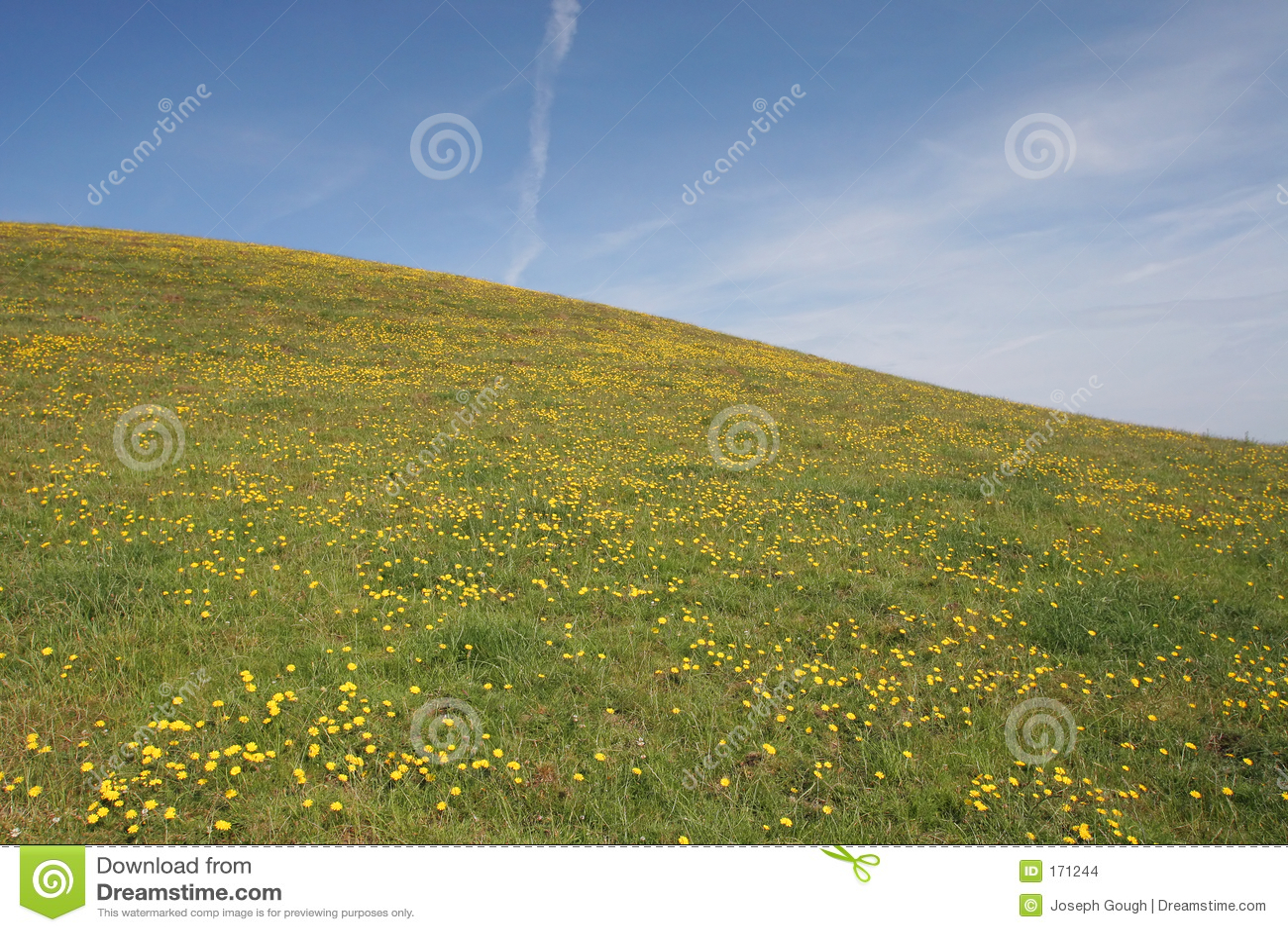 Dandelion Hill