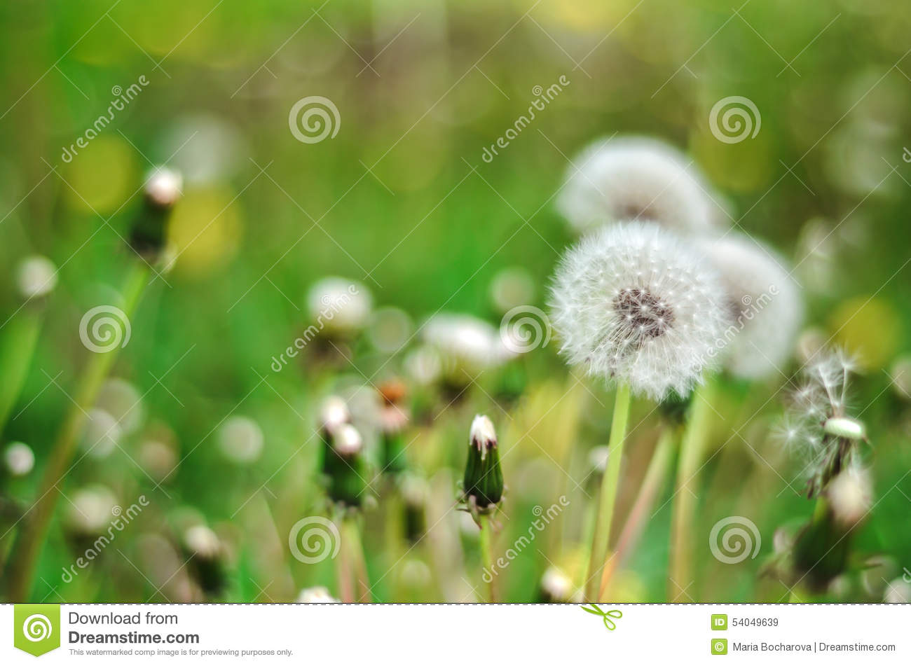 Backyard Summer Background :  Isolated In The Green Background Summer Stock Photo  Image 54049639