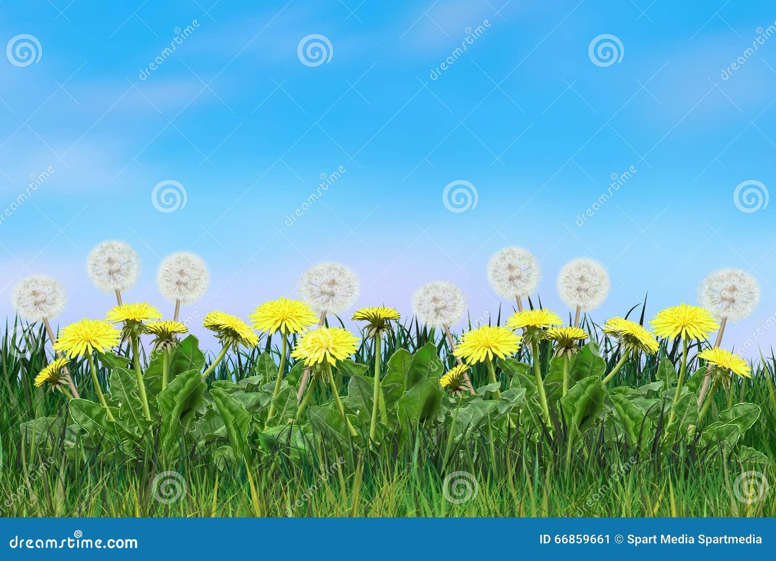 Download Dandelion Flowers Sunny Day Blowball Floral Landscape Stock Illustration - Illustration of beauty, morning: 66859661
