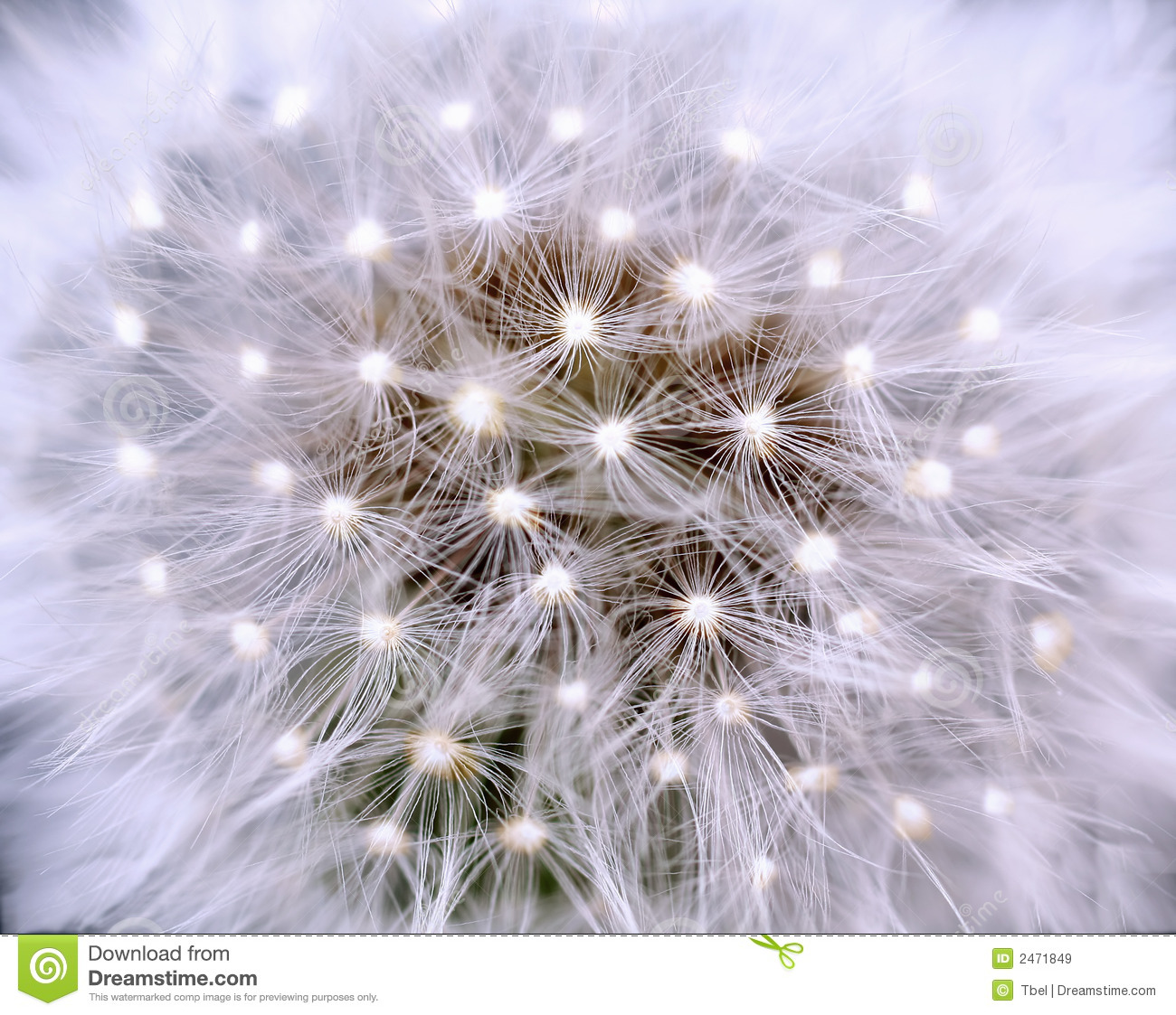 Dandelion With Light Royalty Free Stock Images - Image ...