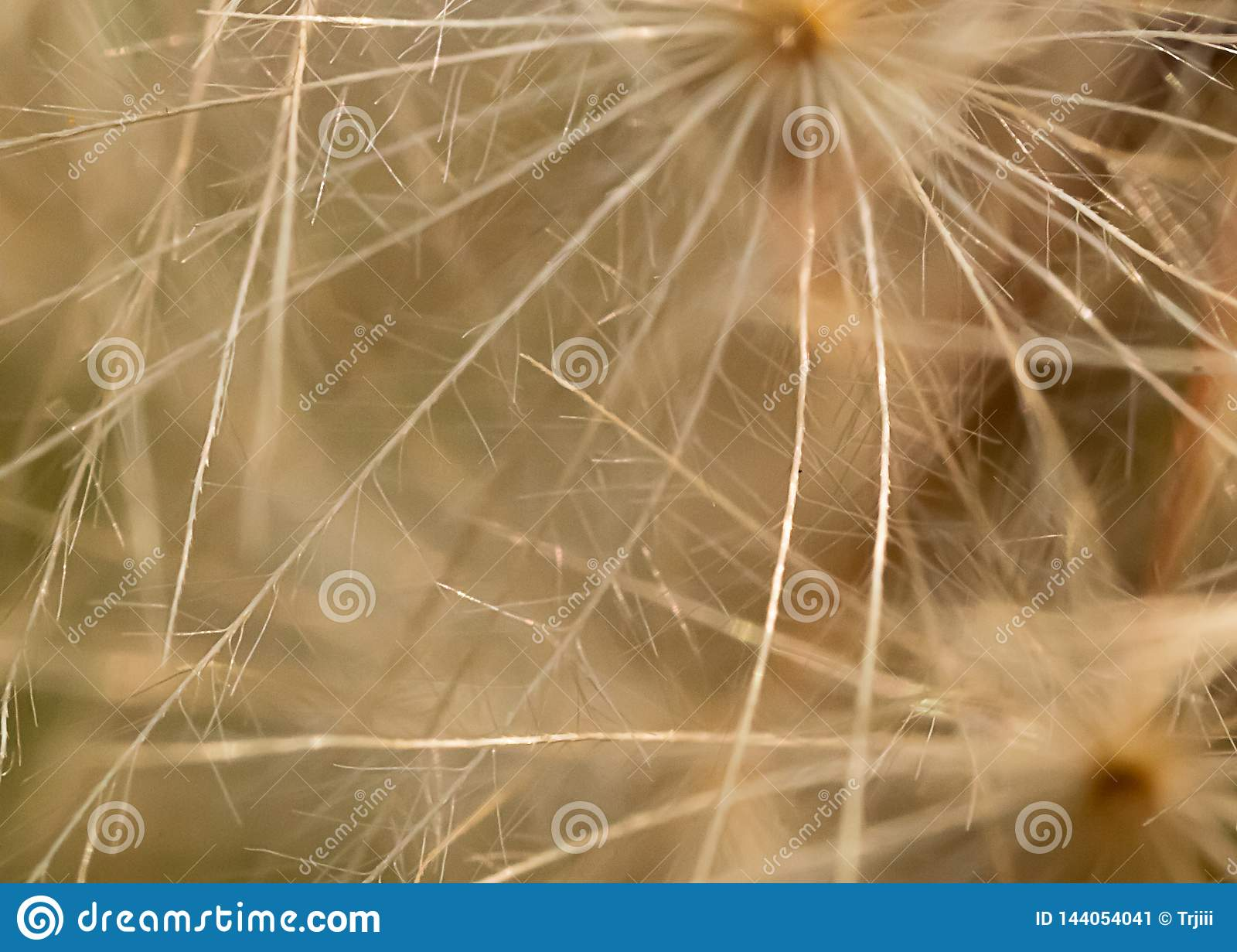 Dandelion seed macro patern in white