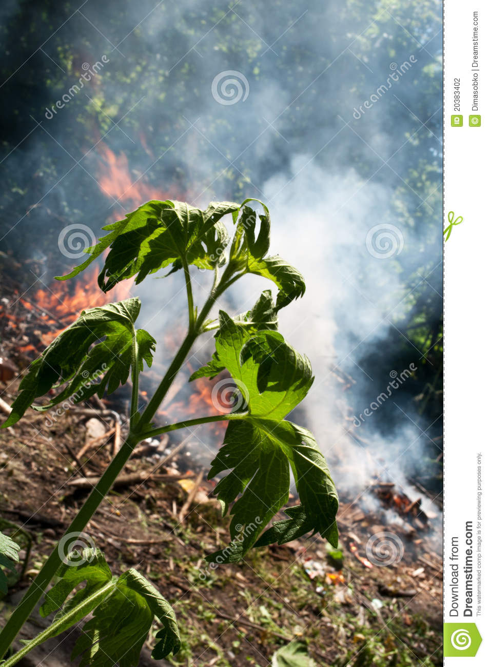 environment in danger Application for a damage or danger permit under the migratory birds regulations   home environment and natural resources wildlife, plants and  table below  the species of migratory birds causing the damage or danger,.