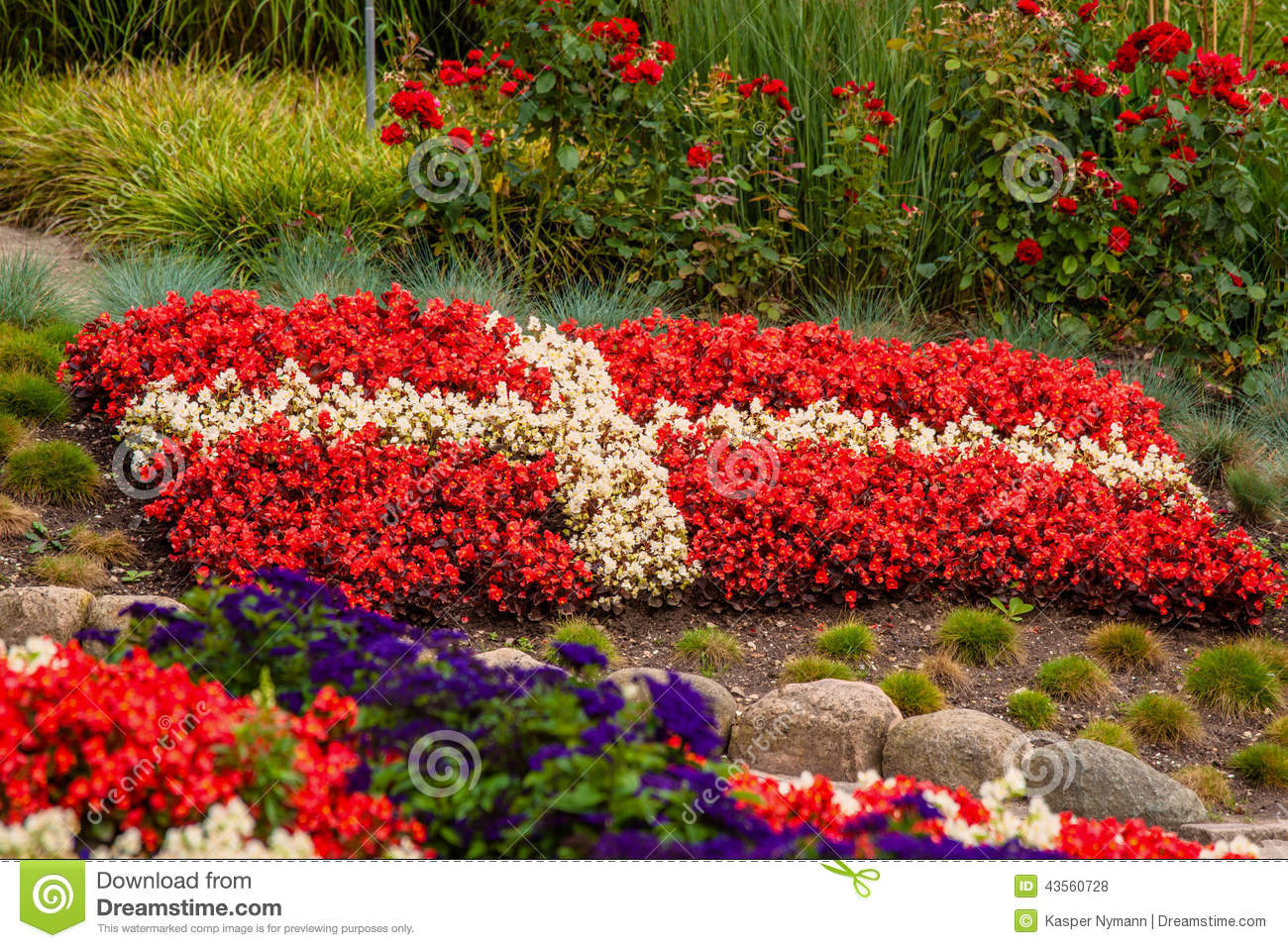 Danish flag made out of flowers stock photo image of cross flower garden with red and white flowers illustrating the danish flag mightylinksfo
