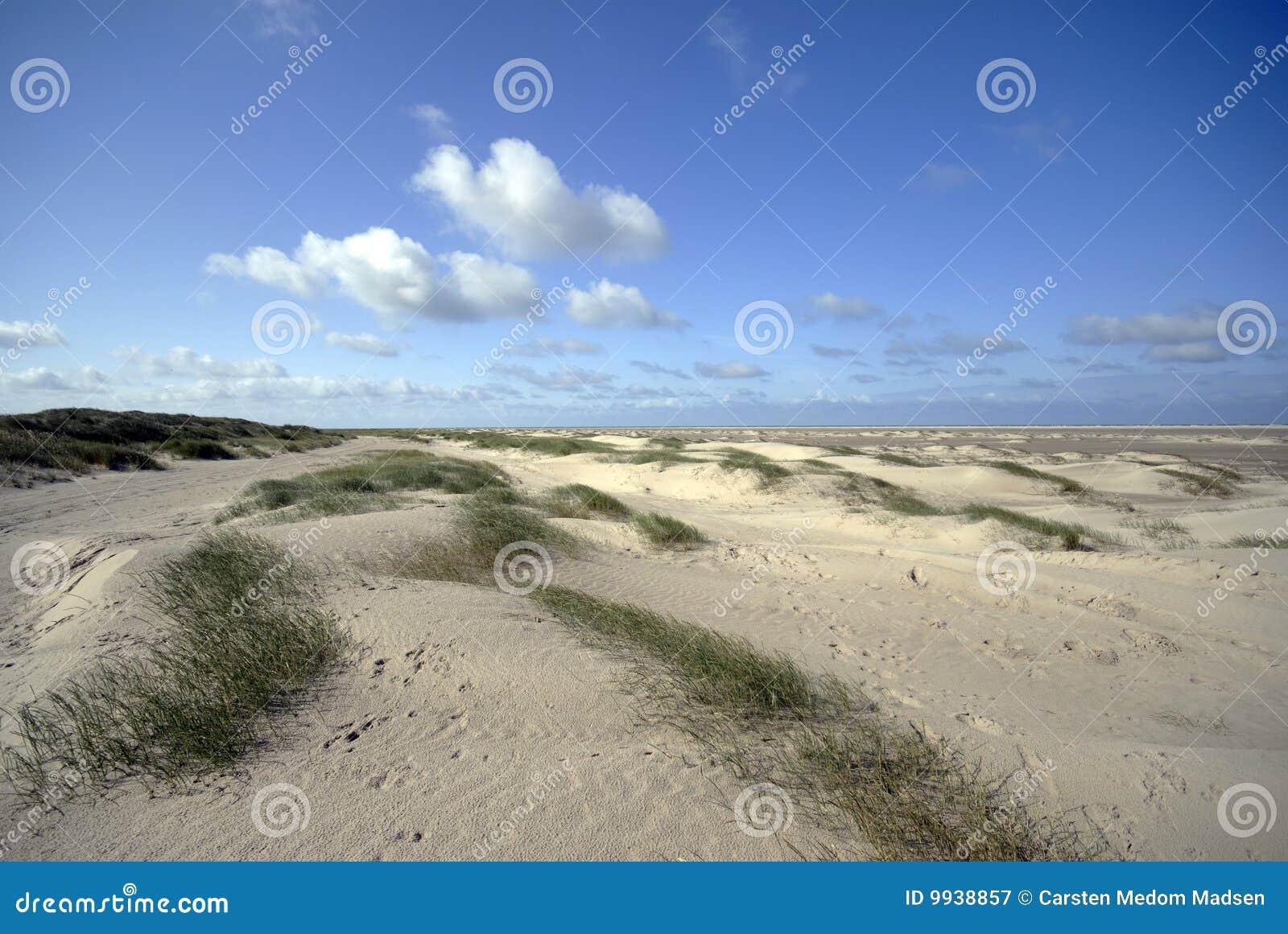 Danish Sand dunes