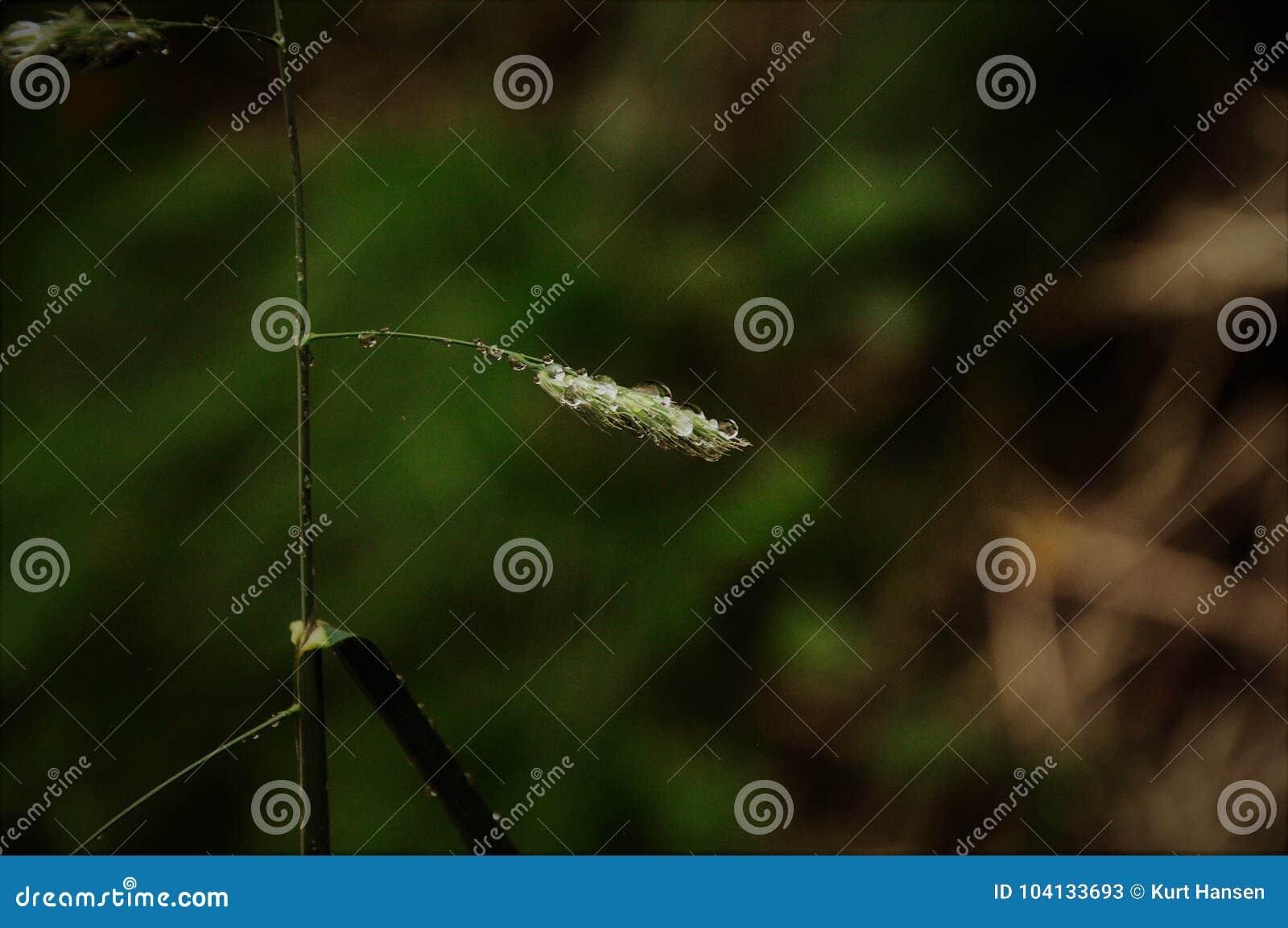 Grass whit rain