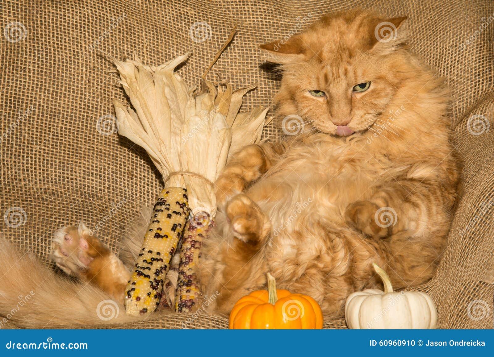 Danksagungs-Katze