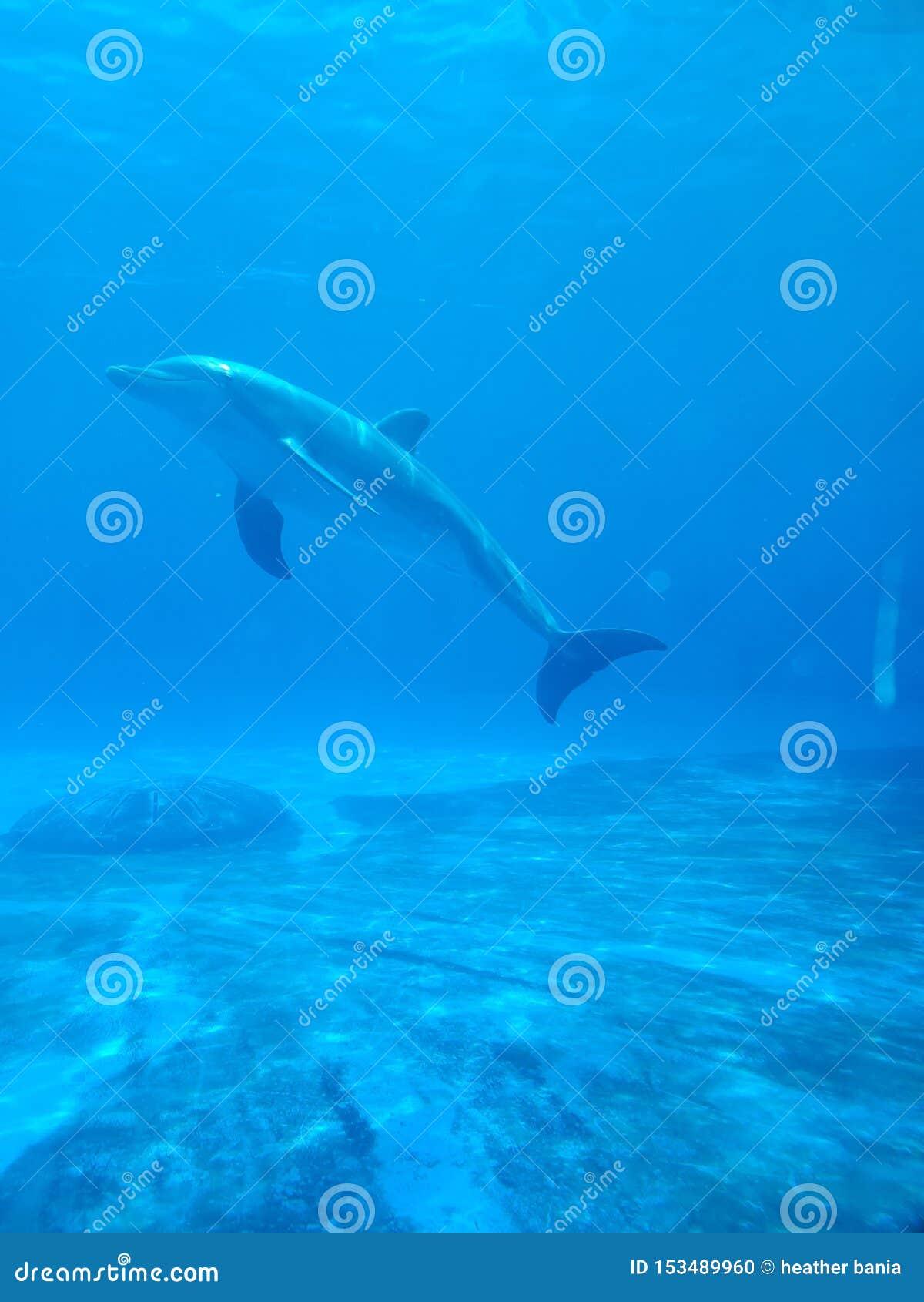 Dans l eau bleue paisiblement
