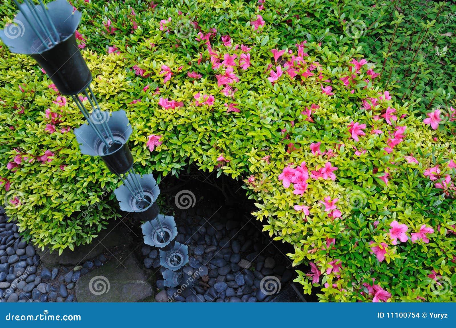 Dans Le Jardin Japonais Photo Stock Image Du Vert Fleur 11100754
