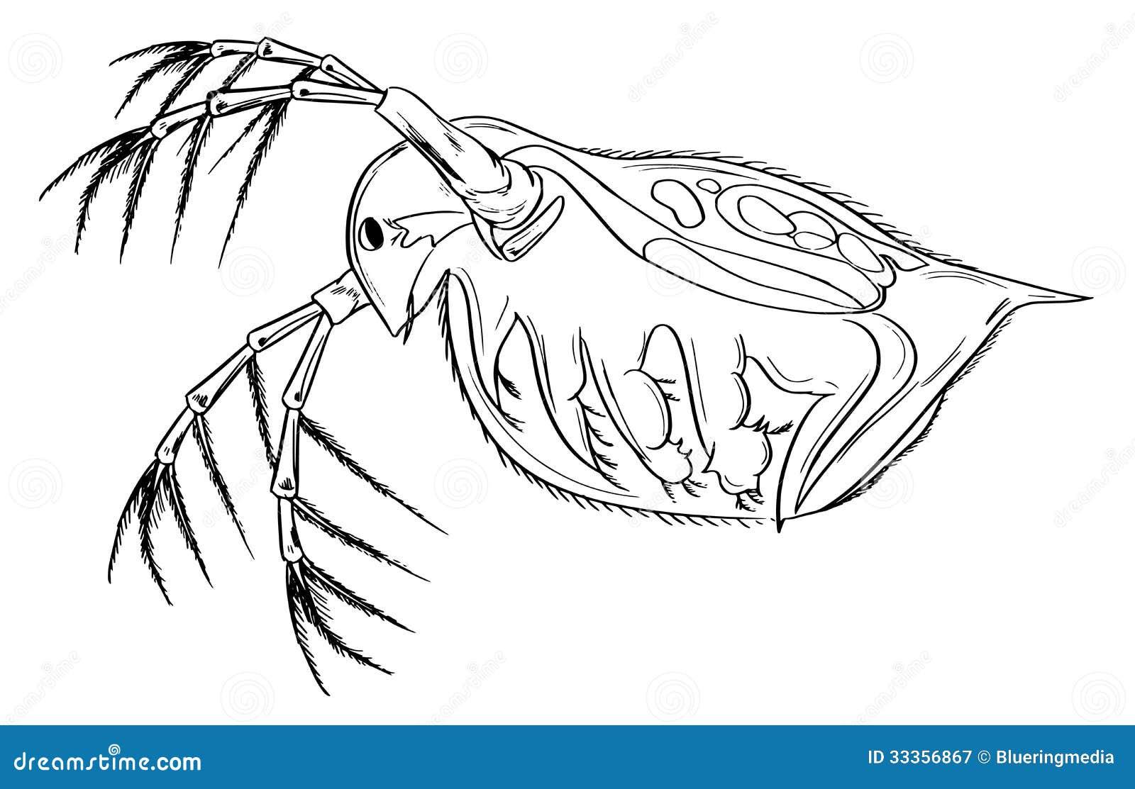 Zooplankton Clipart