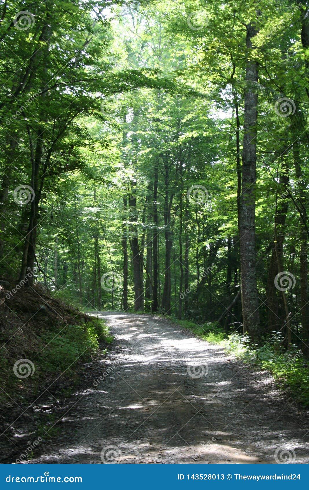 Dappled задняя проселочная дорога через лес