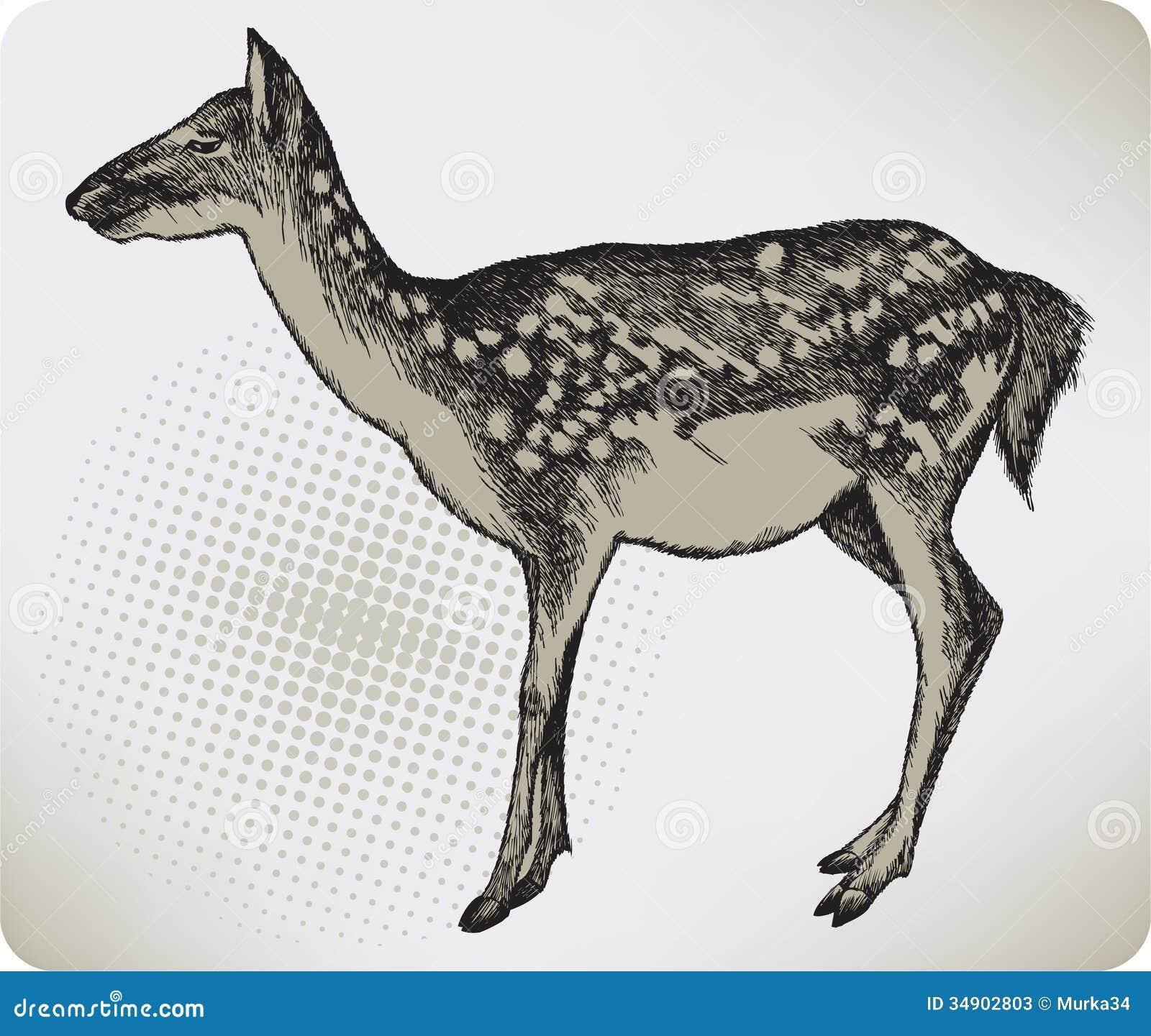 Deer High Quality Stock Image Cartoondealer Com 49412641
