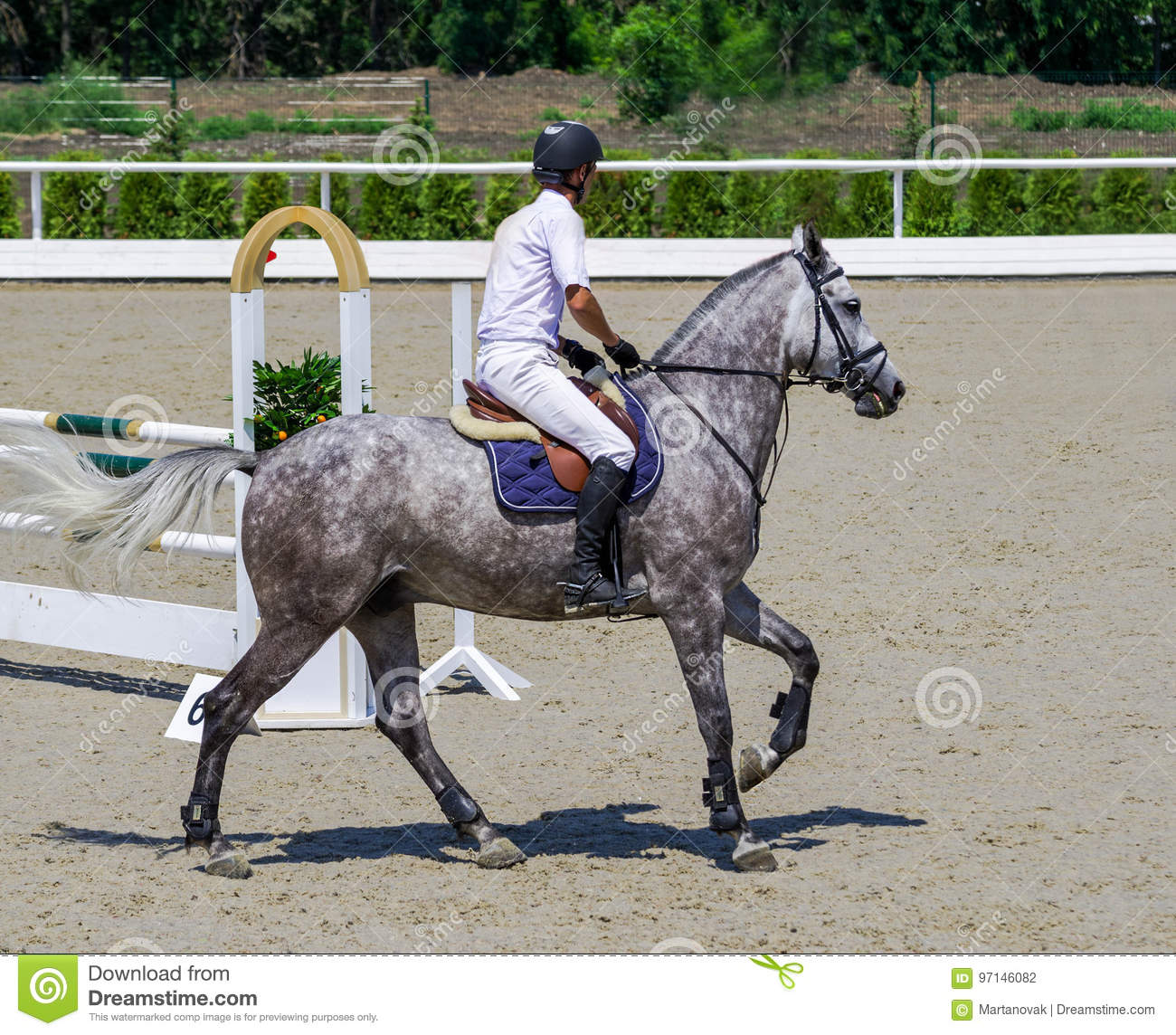 Dappled Gray Horse And Rider In White Shirt Over A Jump Stock Photo Image Of Competition Bright 97146082