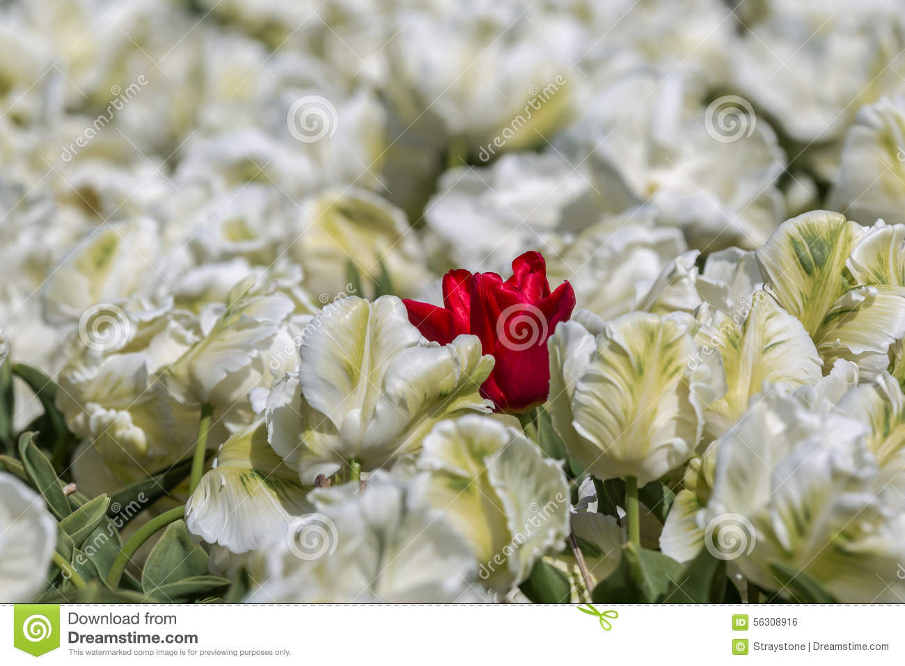 Daring To Be Different Stock Photo Image Of Landscape 56308916
