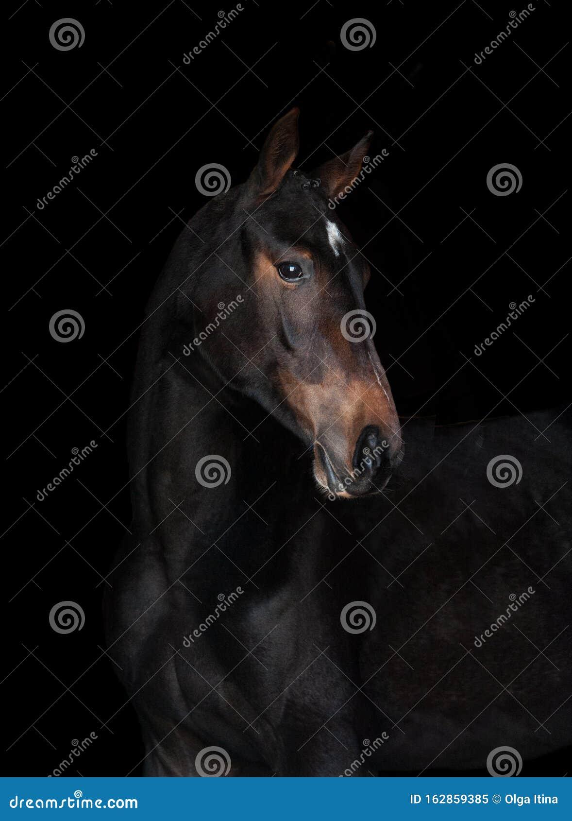 1 329 Closeup Portrait Black Horse Dark Photos Free Royalty Free Stock Photos From Dreamstime