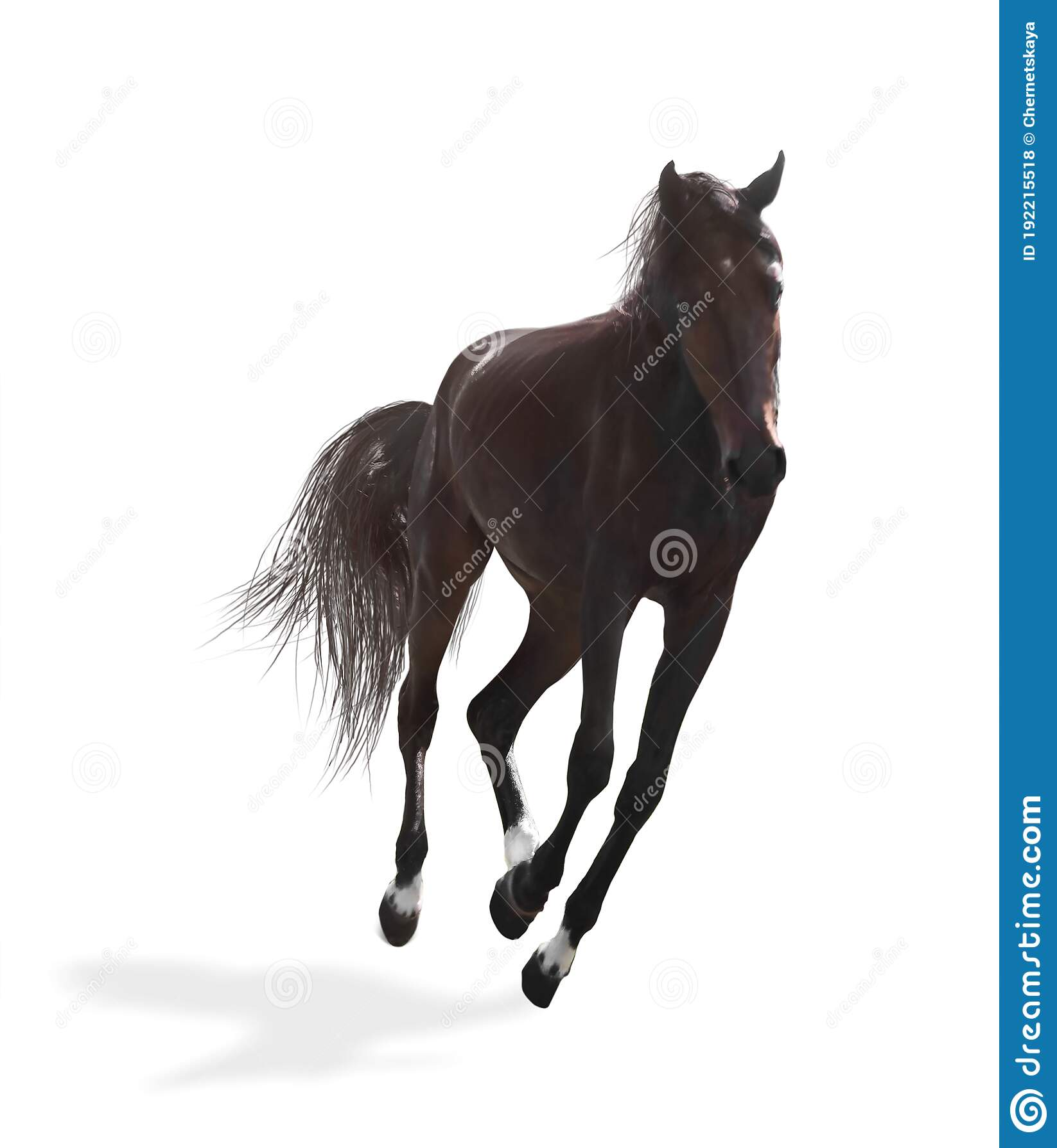 2 284 Beautiful Dark Bay Horse Photos Free Royalty Free Stock Photos From Dreamstime