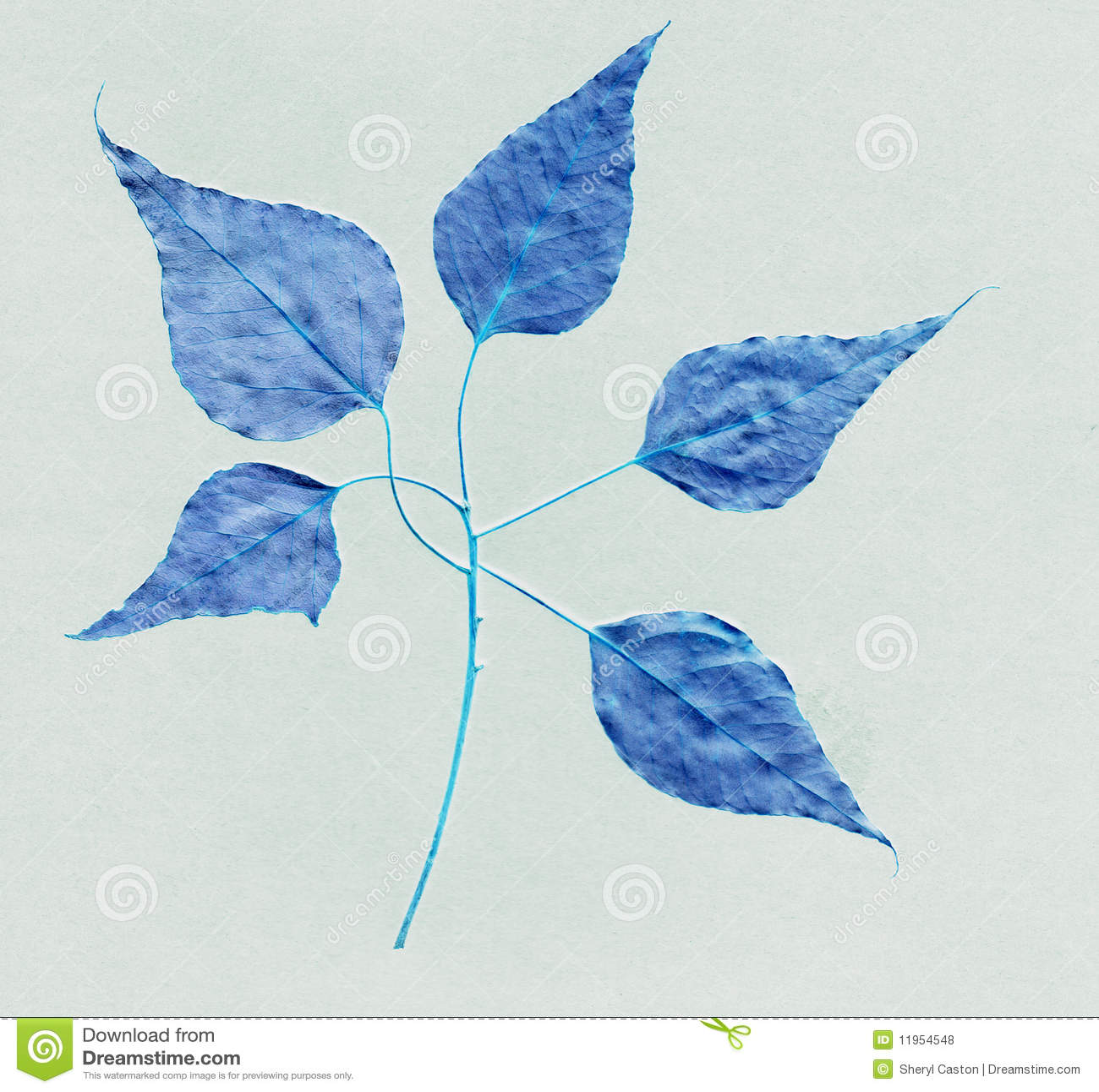 on leaf blue - photo #22