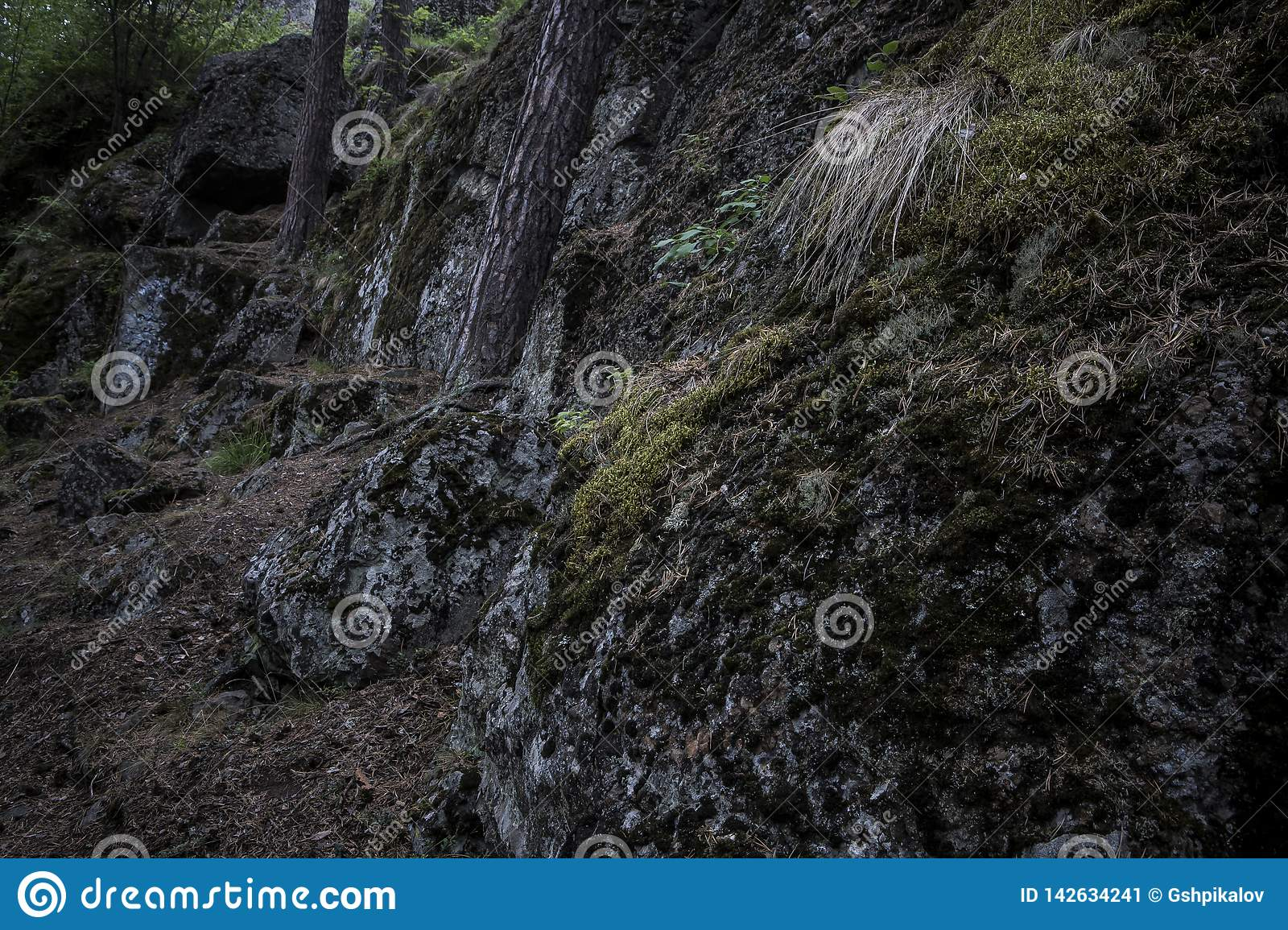 Dark boulders covered in moss in the woods with trees growing up
