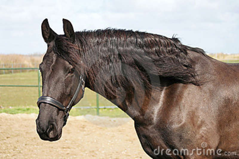 brown horse with black - photo #44