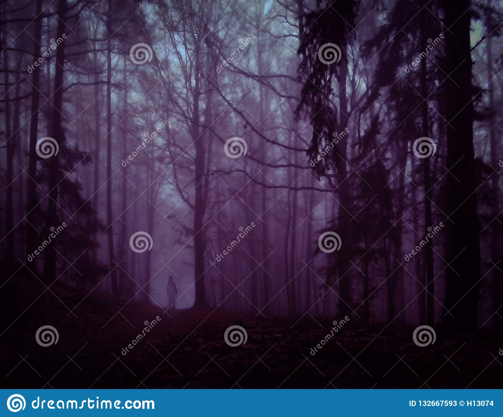Dark Creepy Foggy Forest Stock Image Image Of Landscapes