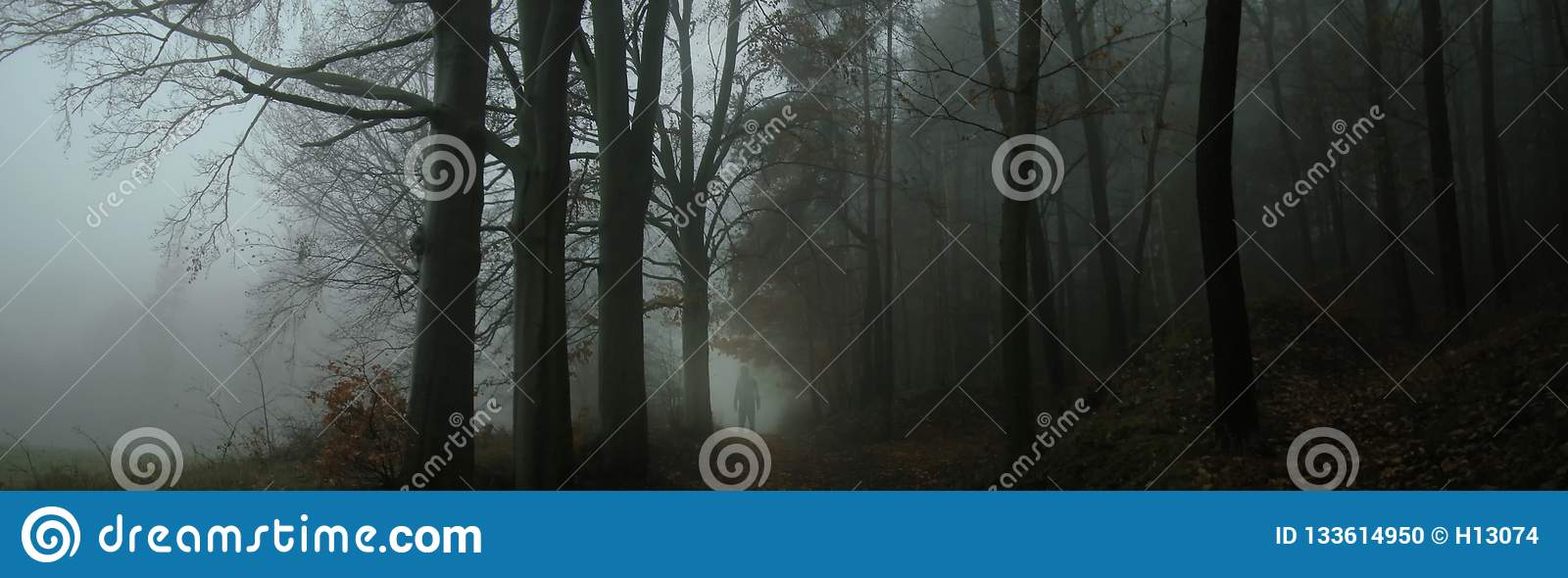 Dark Creepy Foggy Forest Stock Photo Image Of Loneliness