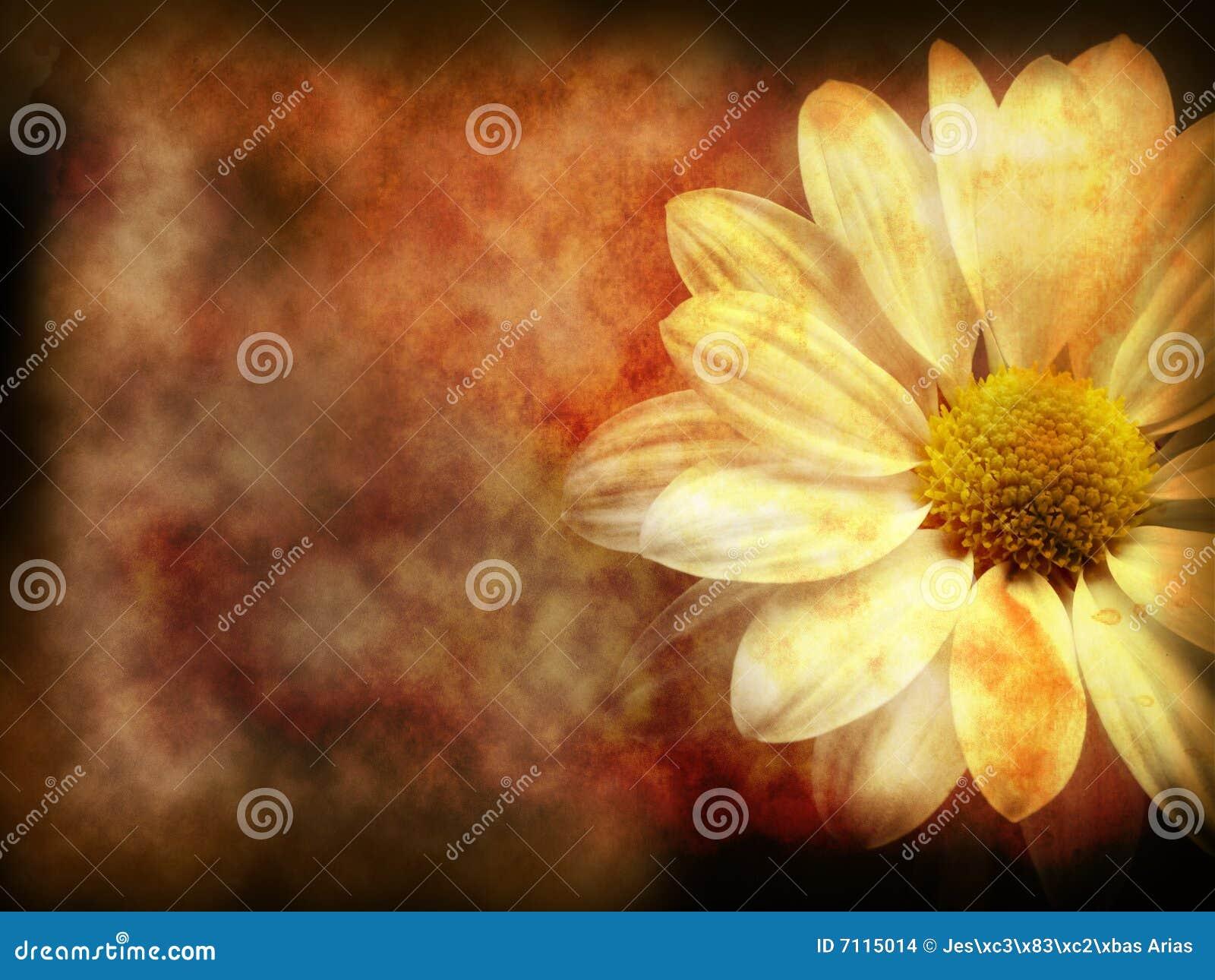 Download Dark floral grunge stock illustration. Illustration of gold - 7115014