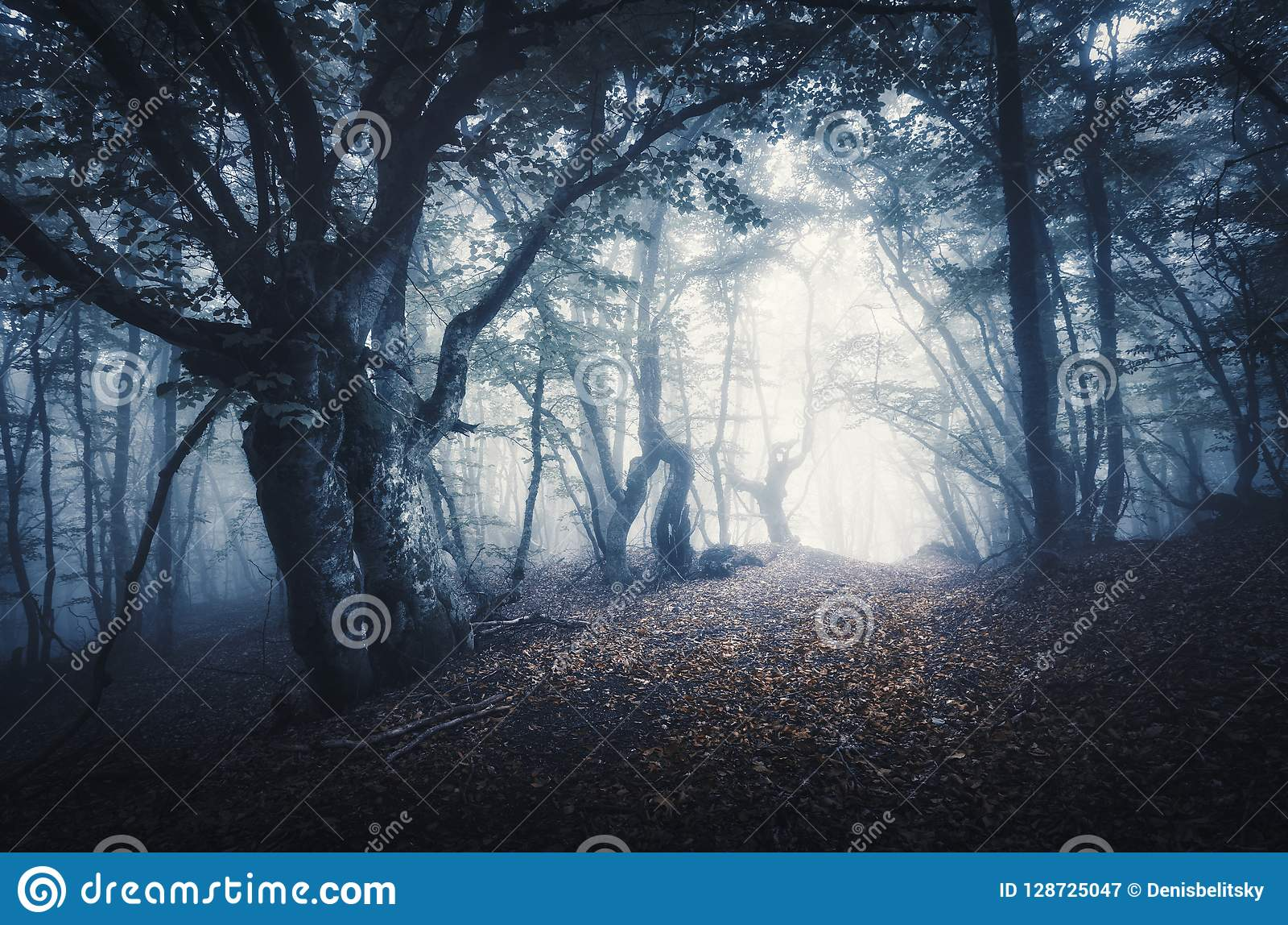 Dark Foggy Forest Mystical Autumn Forest With Trail In Fog Stock Image Image Of Leaves Background 128725047 Autumn fog trees forest alley road
