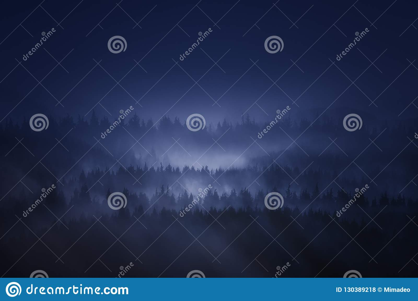 Dark forest in the mountain at night