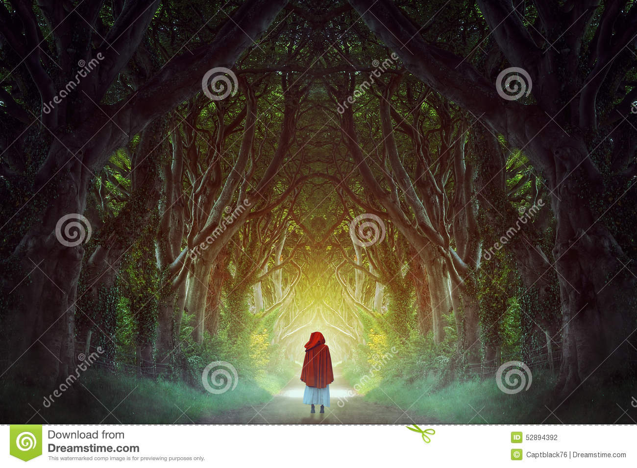 Download Dark forest road stock photo. Image of dark, isolation - 52894392