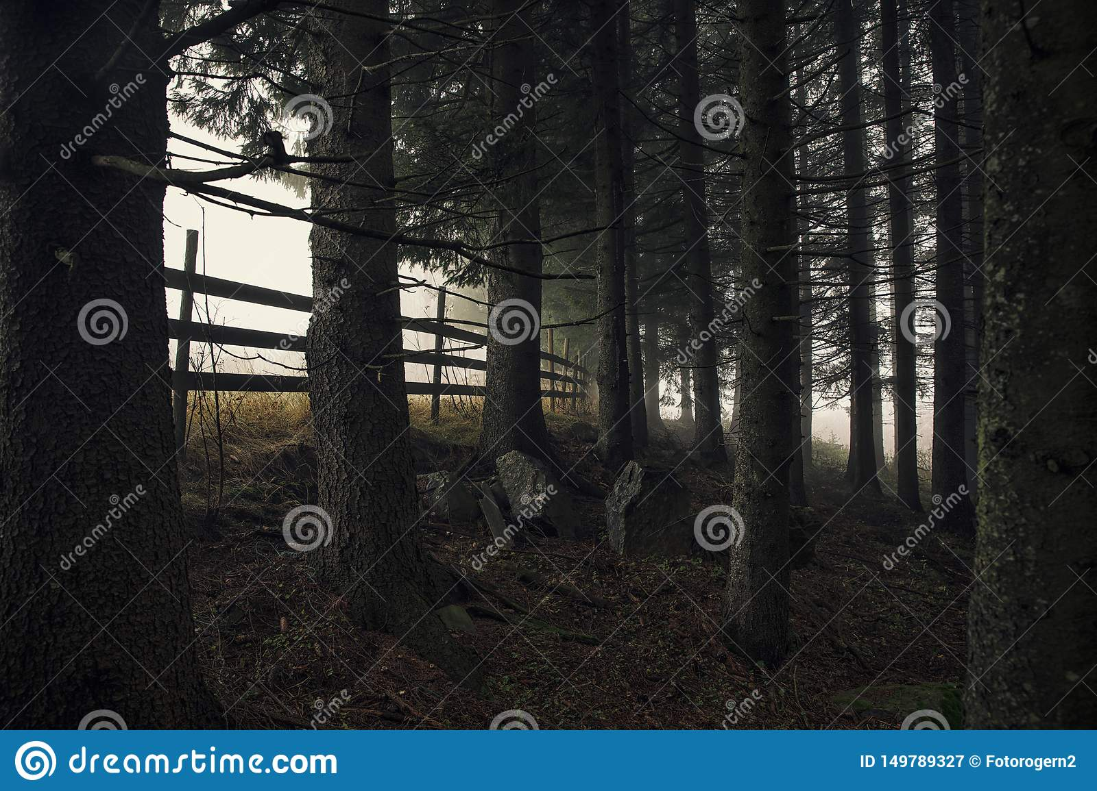 A dark forest scene with fog