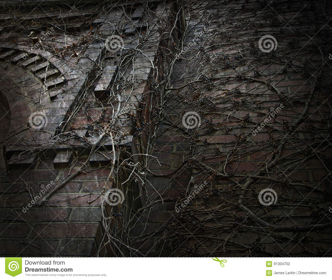 Download Dark Gothic Vine Covered Wall Stock Photo