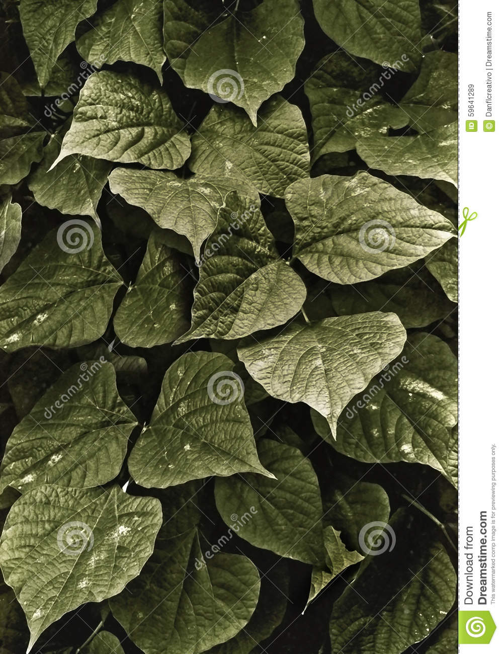 Dark Green Leaves Background Stock Photo - Image: 59641289