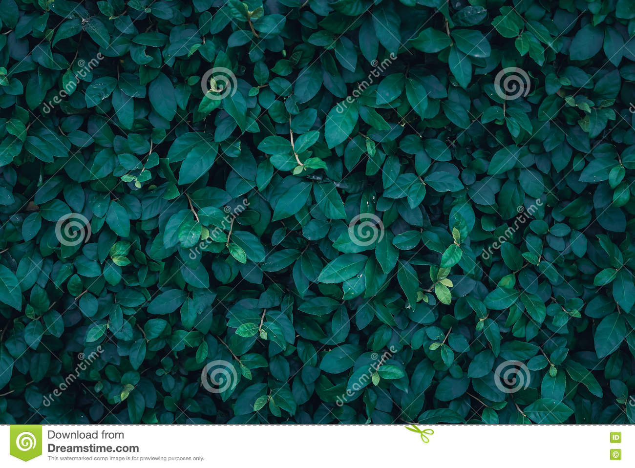 Photo Collection Dark Leaves Background