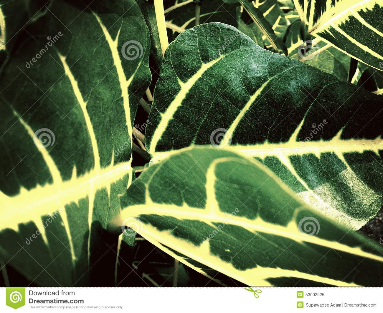 Dark Green Leaves With Yellow White Core Background ...