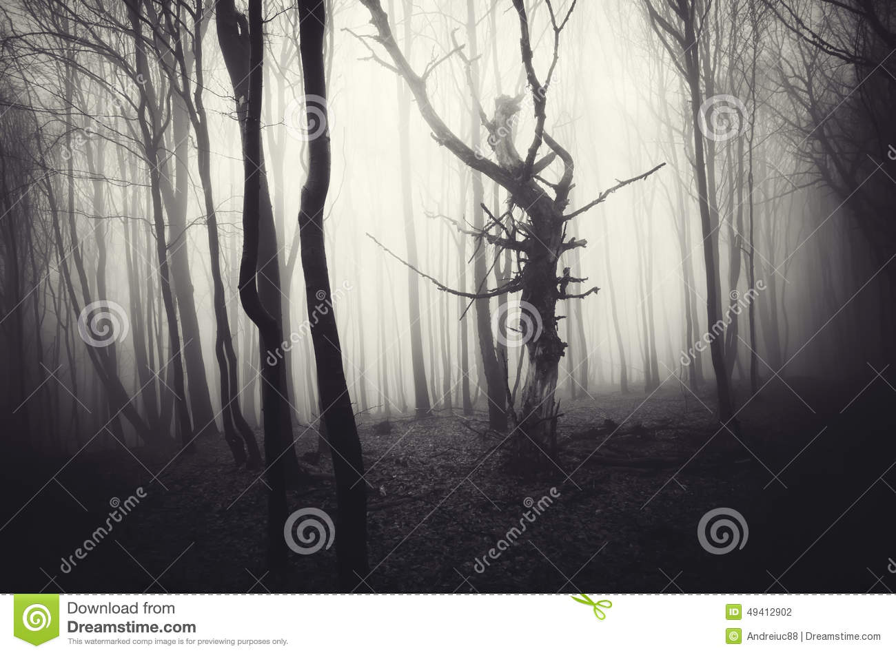 dark halloween scene of haunted forest with fog