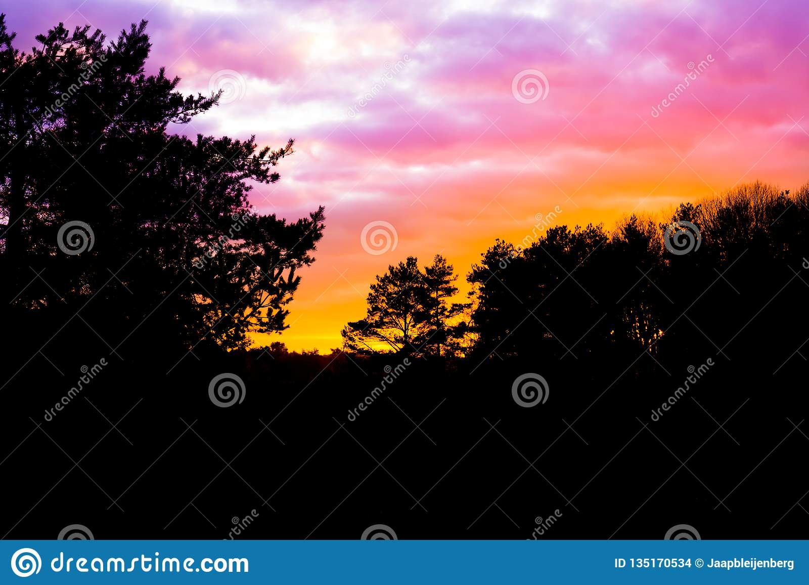 Dark heather landscape in the forest with nacreous clouds that color the sky, a rare weather phenomenon