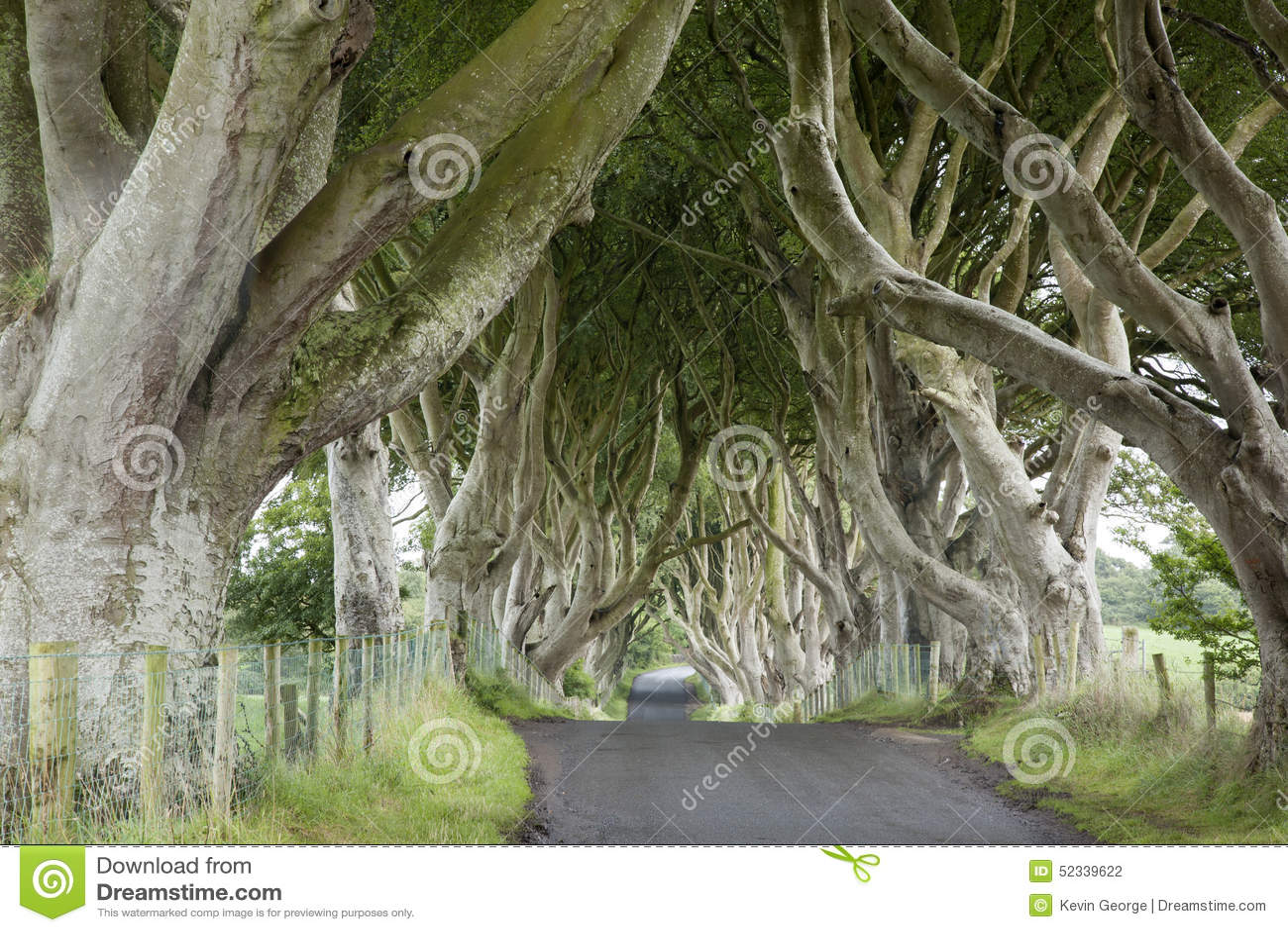 Dark Hedges, County Antrim