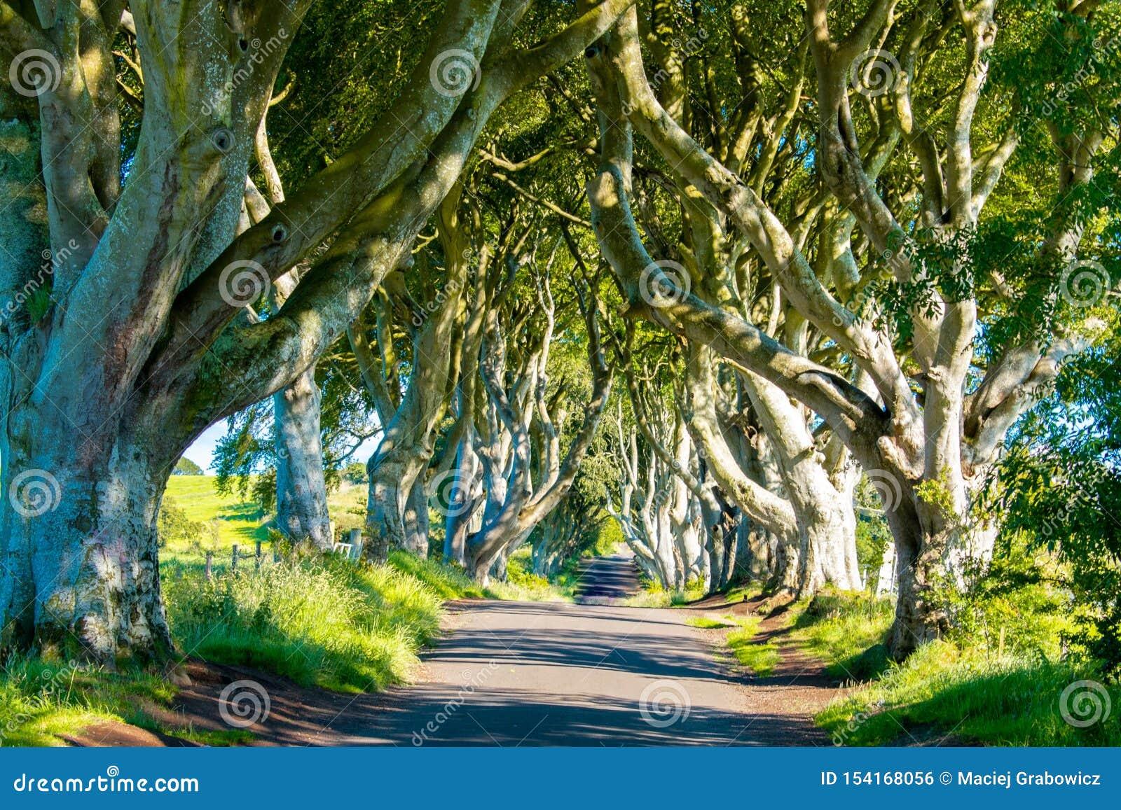 Dark Hedges In Northern Ireland Beautiful Avenue Of Beech Trees ...