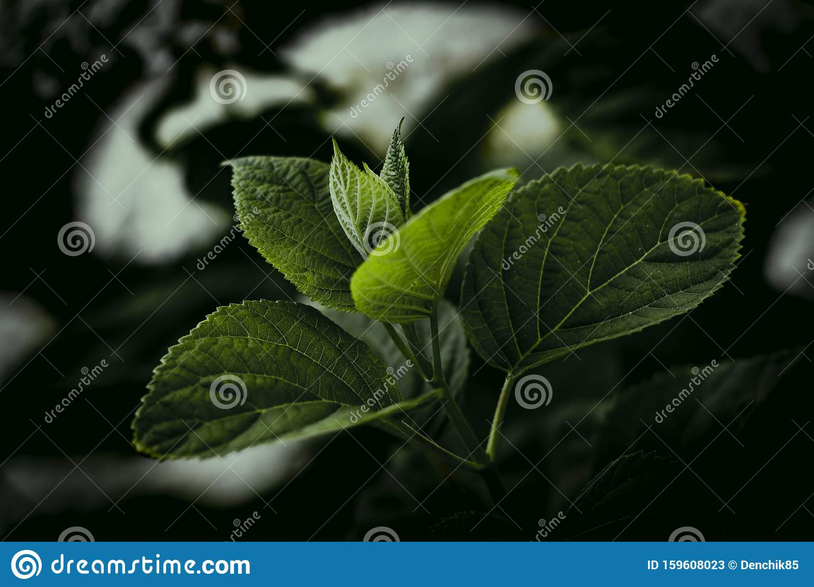 Dark Leafy Background Wallpaper Plant Green Leaves Stock Image Image Of Fresh Foliage 159608023